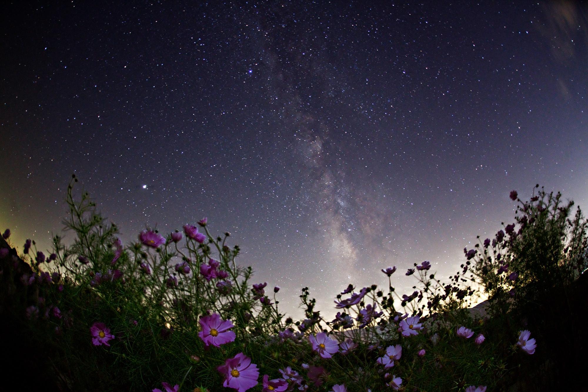картинки с цветами на фоне космоса художница елена