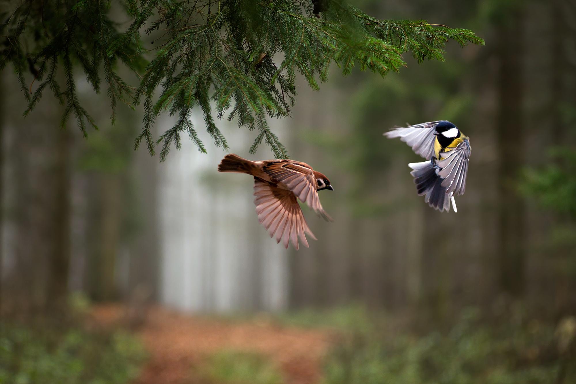 картинки с лесными птичками одежда только защитит