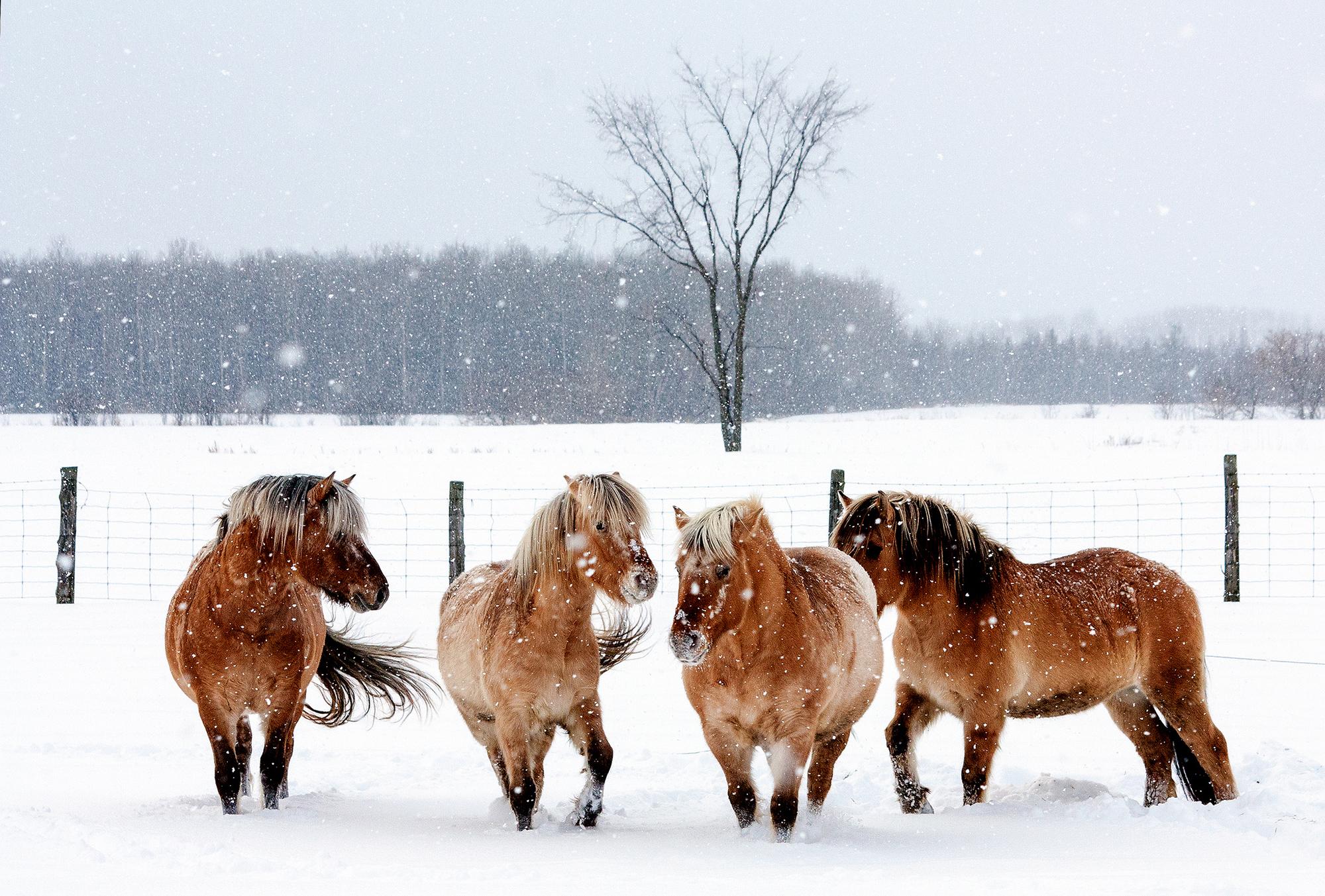 обои для рабочего стола зимние лошади № 465237 бесплатно