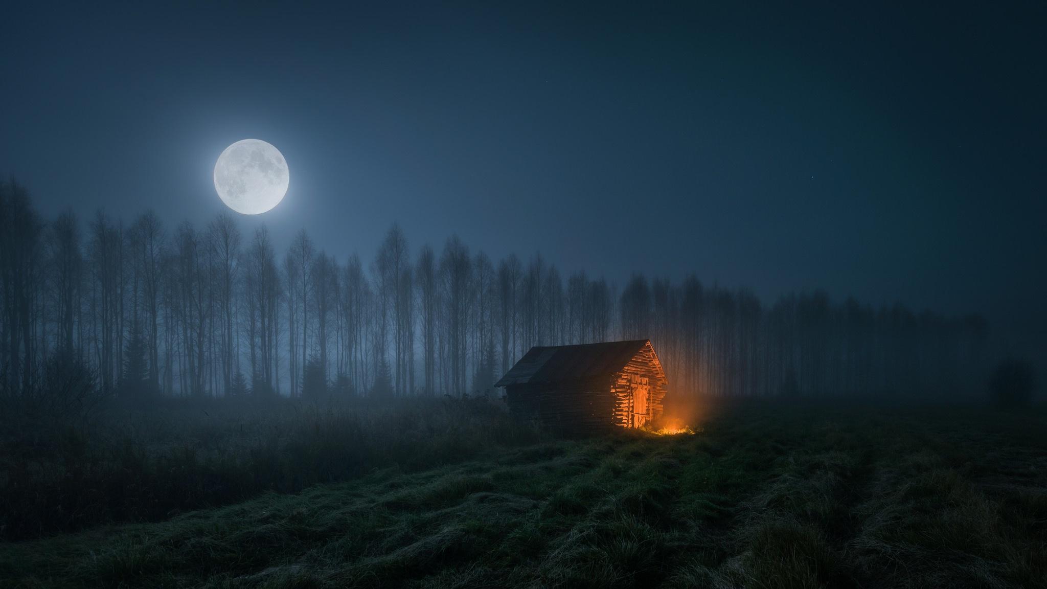 ночь в лесу в полнолуние картинки смесь