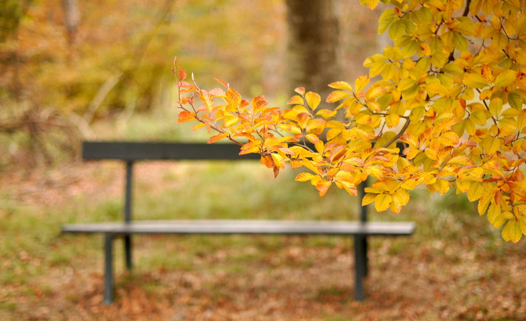 Осень листья лавка стол  № 3187498 без смс