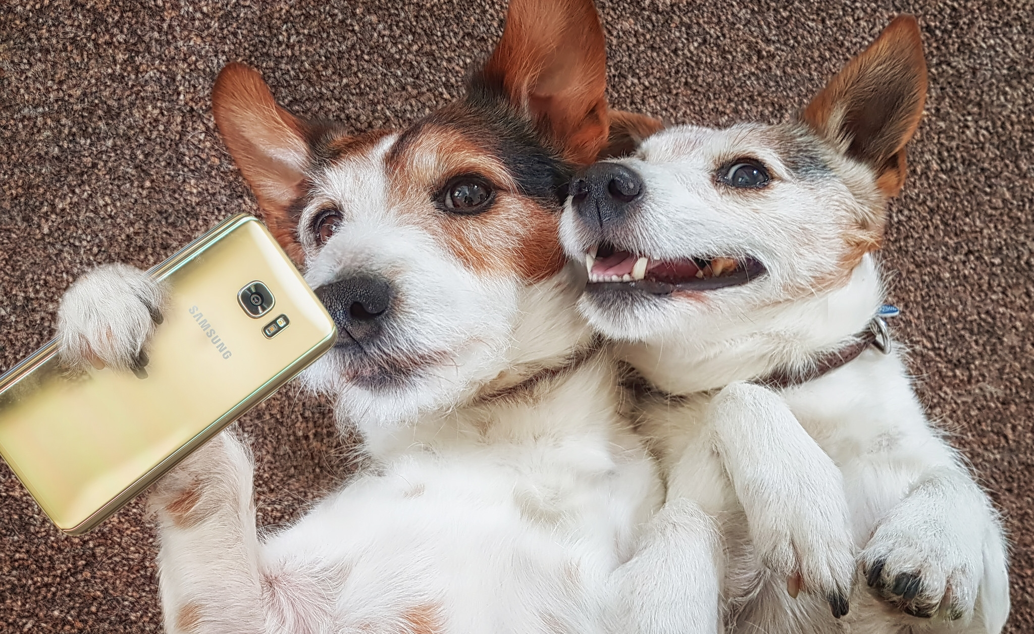 Картинки с юмором про собак, спб для посткроссинга