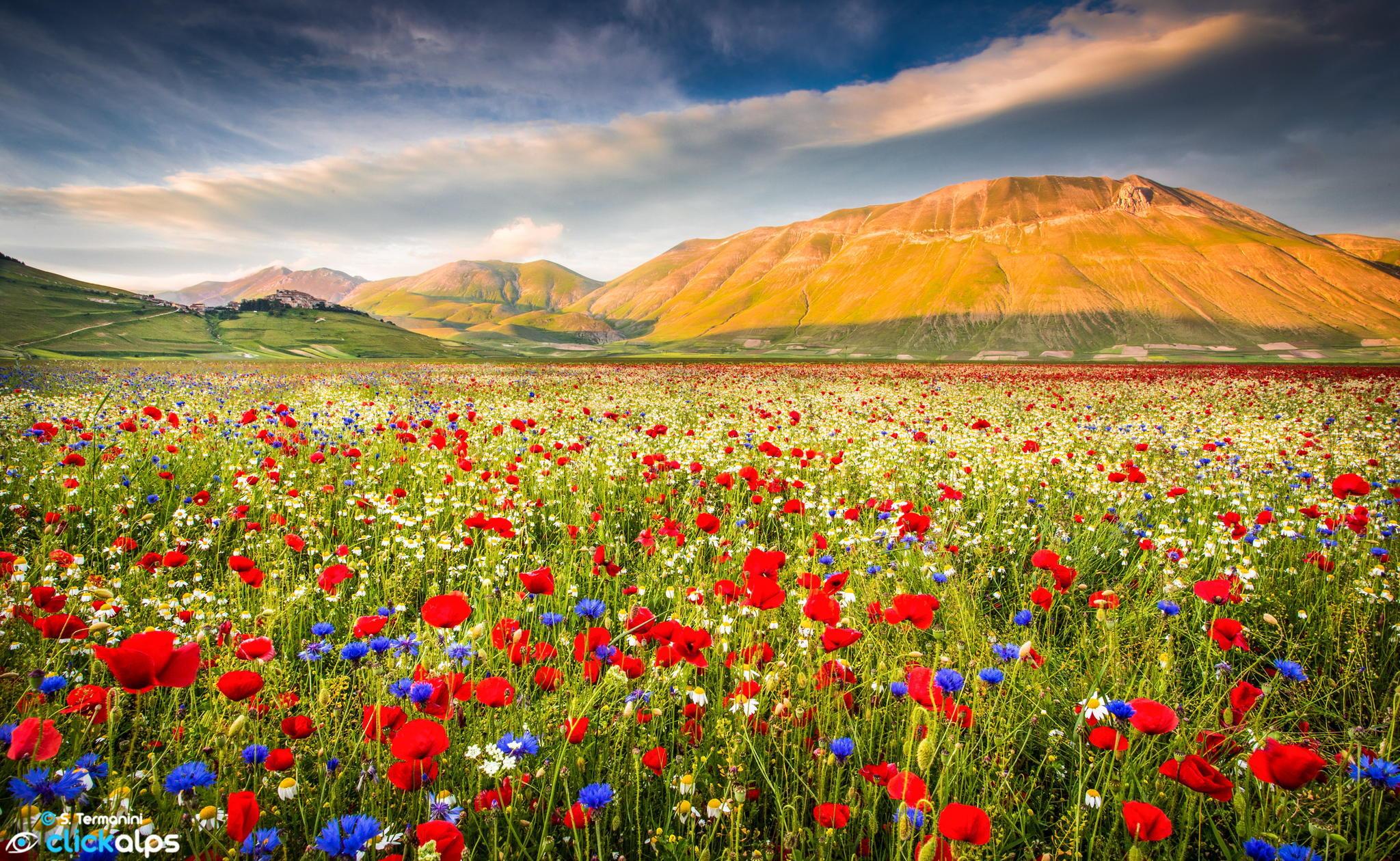 фото пейзаж поле цветы книге нагрудные знаки