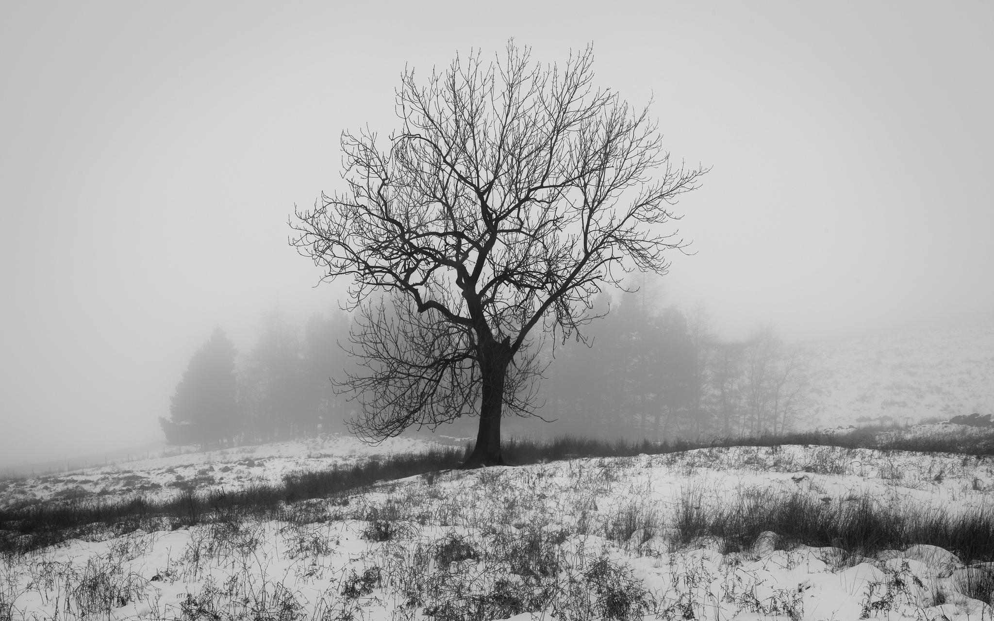 Черно белые деревья картинки в большом разрешении