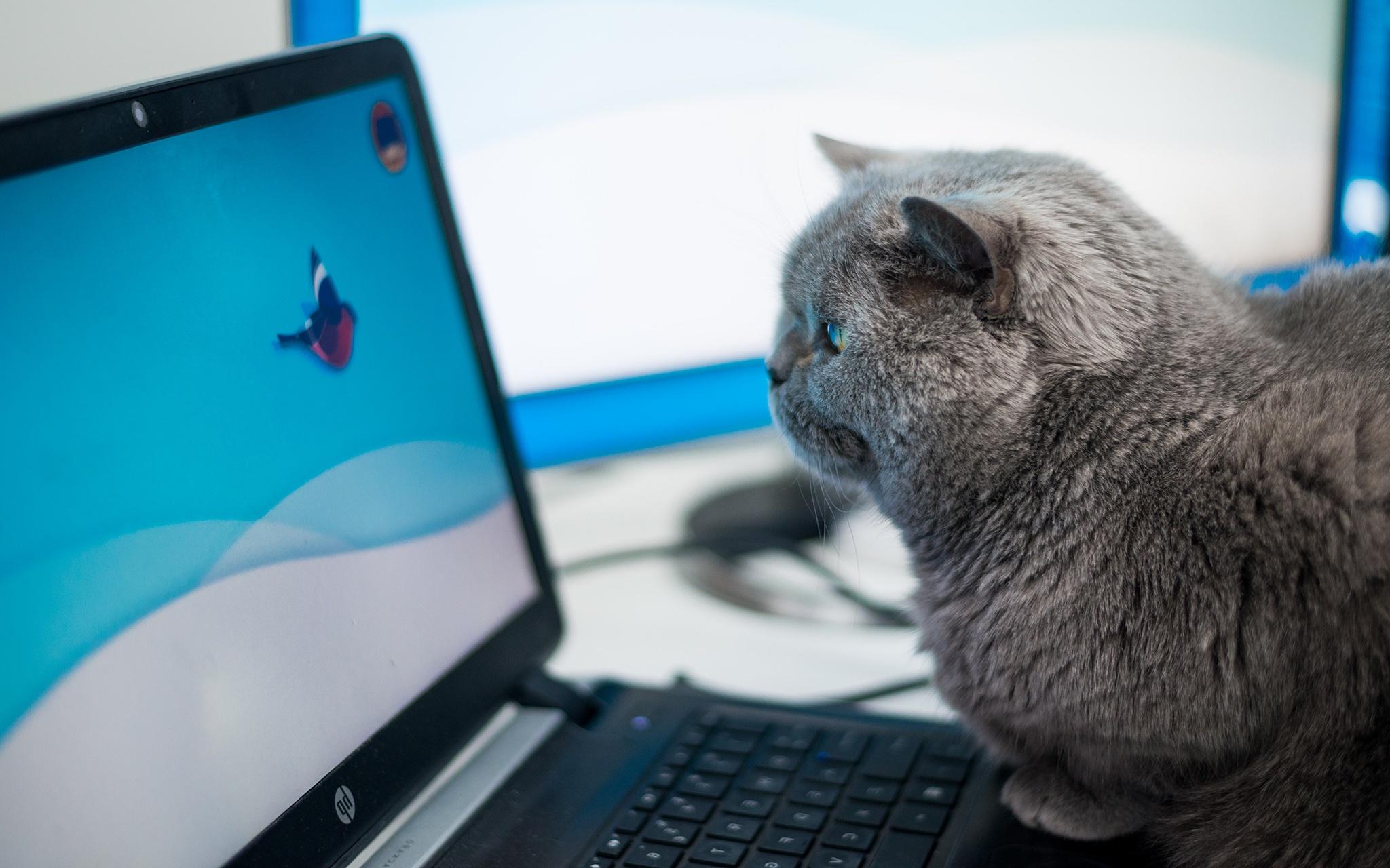Прикольный котик картинка для клавиатуры живет