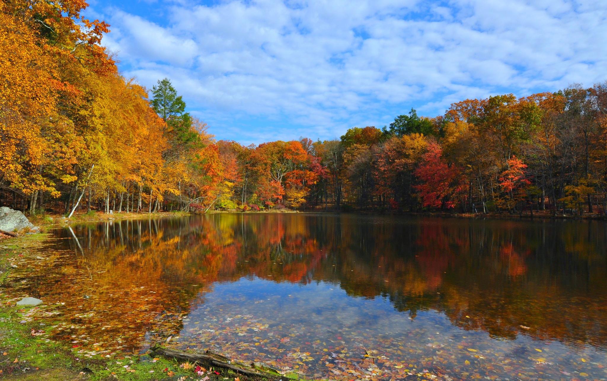 осенний лес у озера  № 254829  скачать