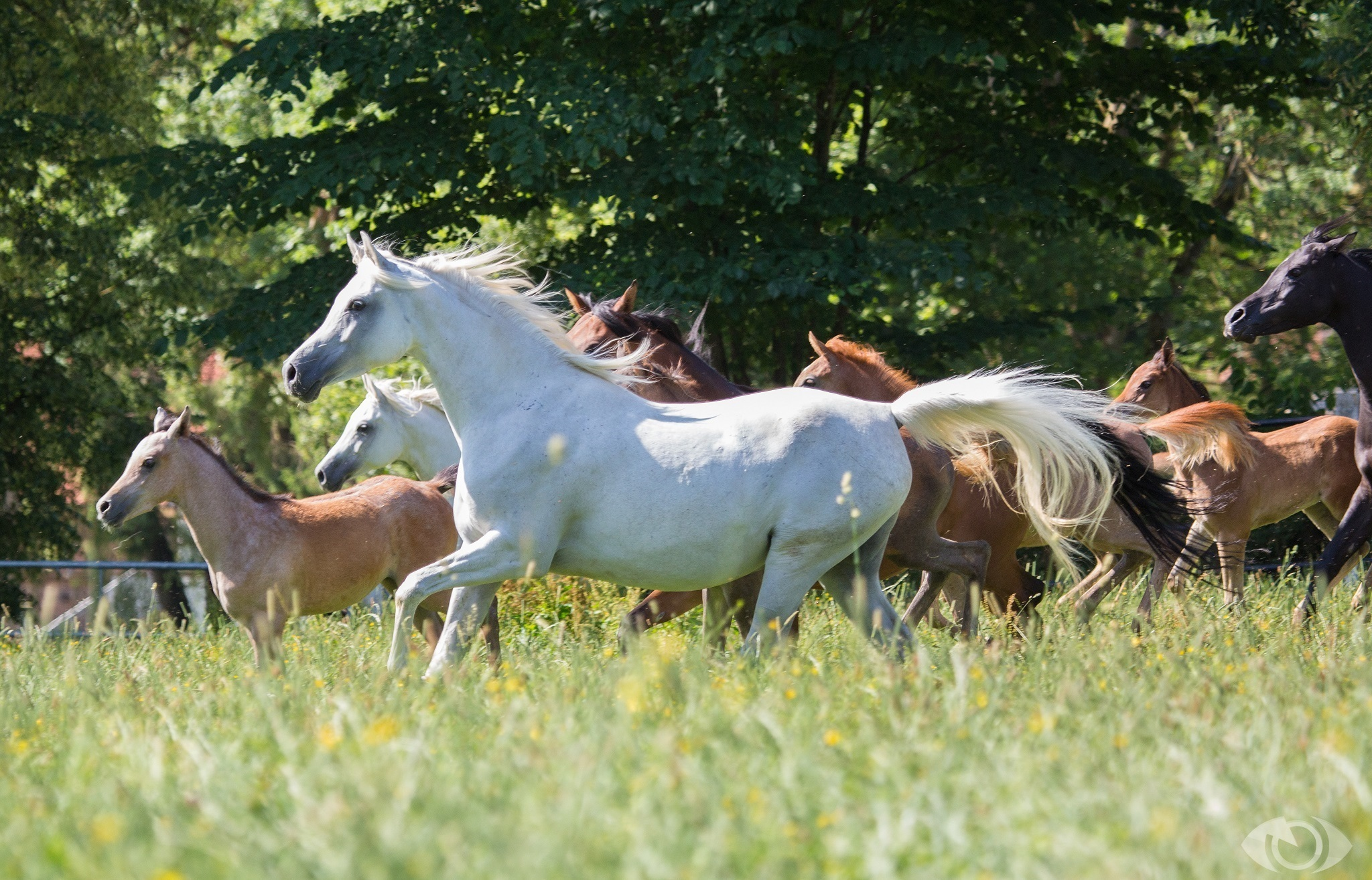 лошадь конь лес поляна  № 99126  скачать