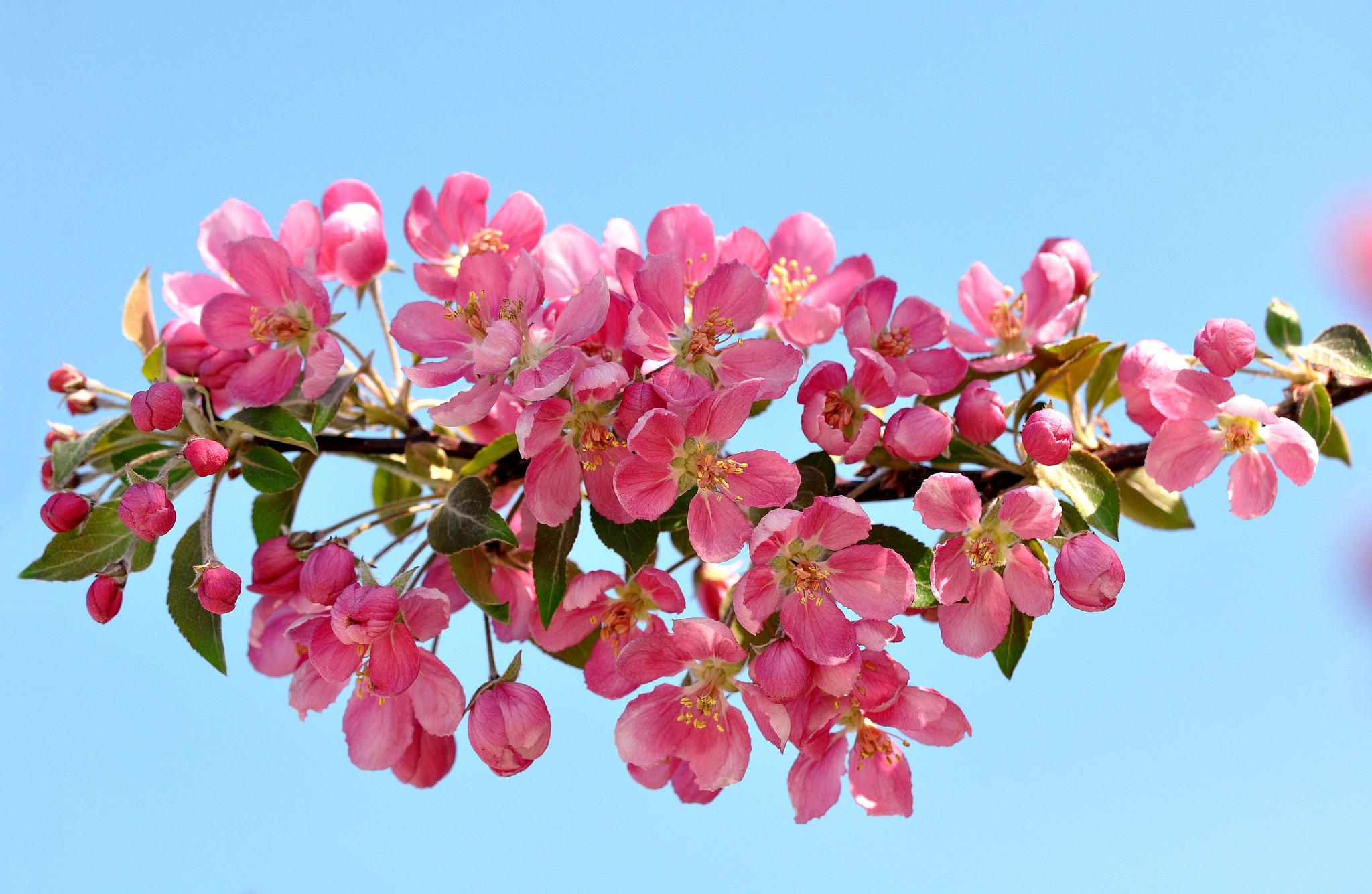 Картинки весенних веточек и цветов