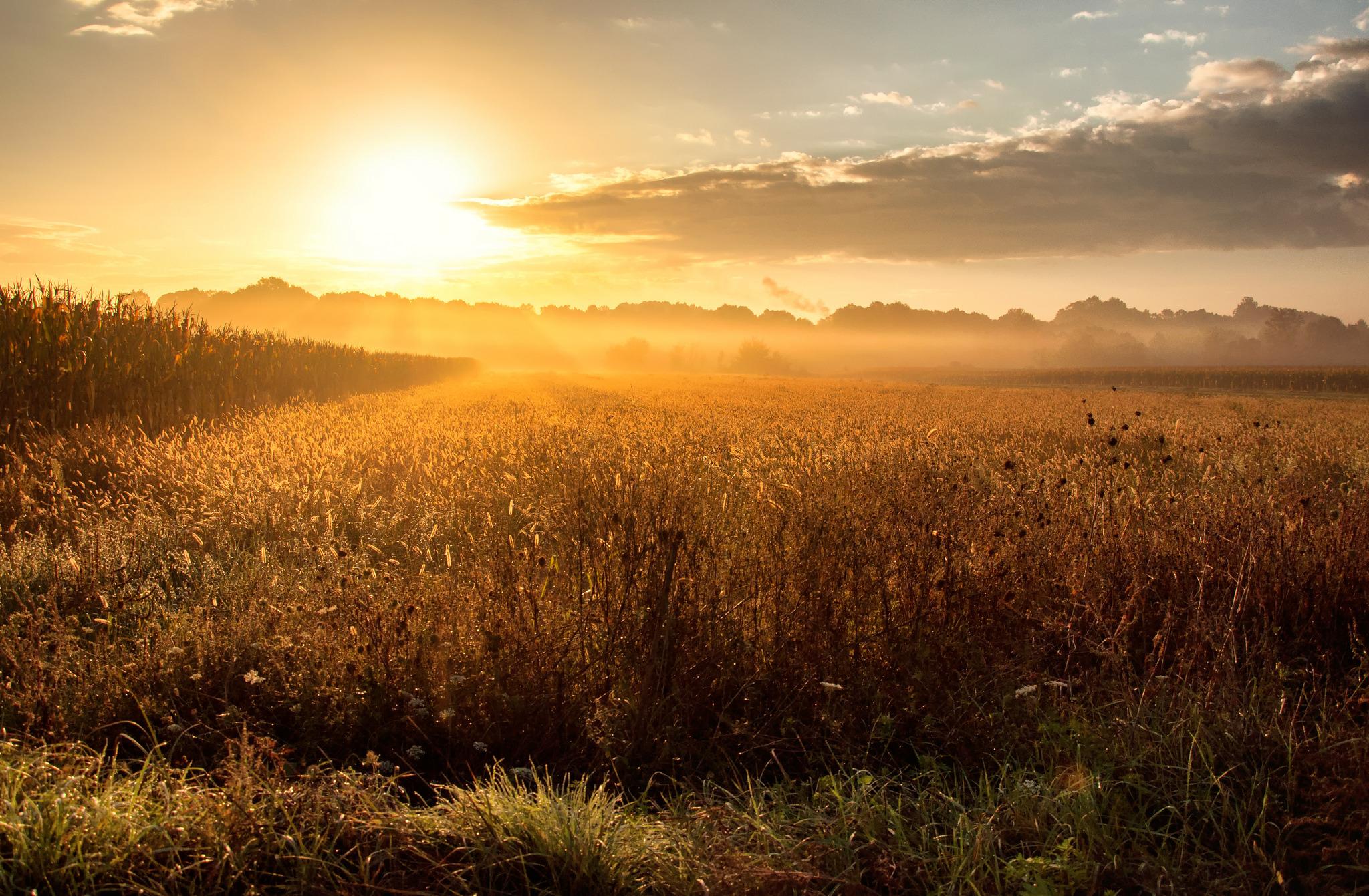 Рассвет утренний туман  № 3795925 бесплатно