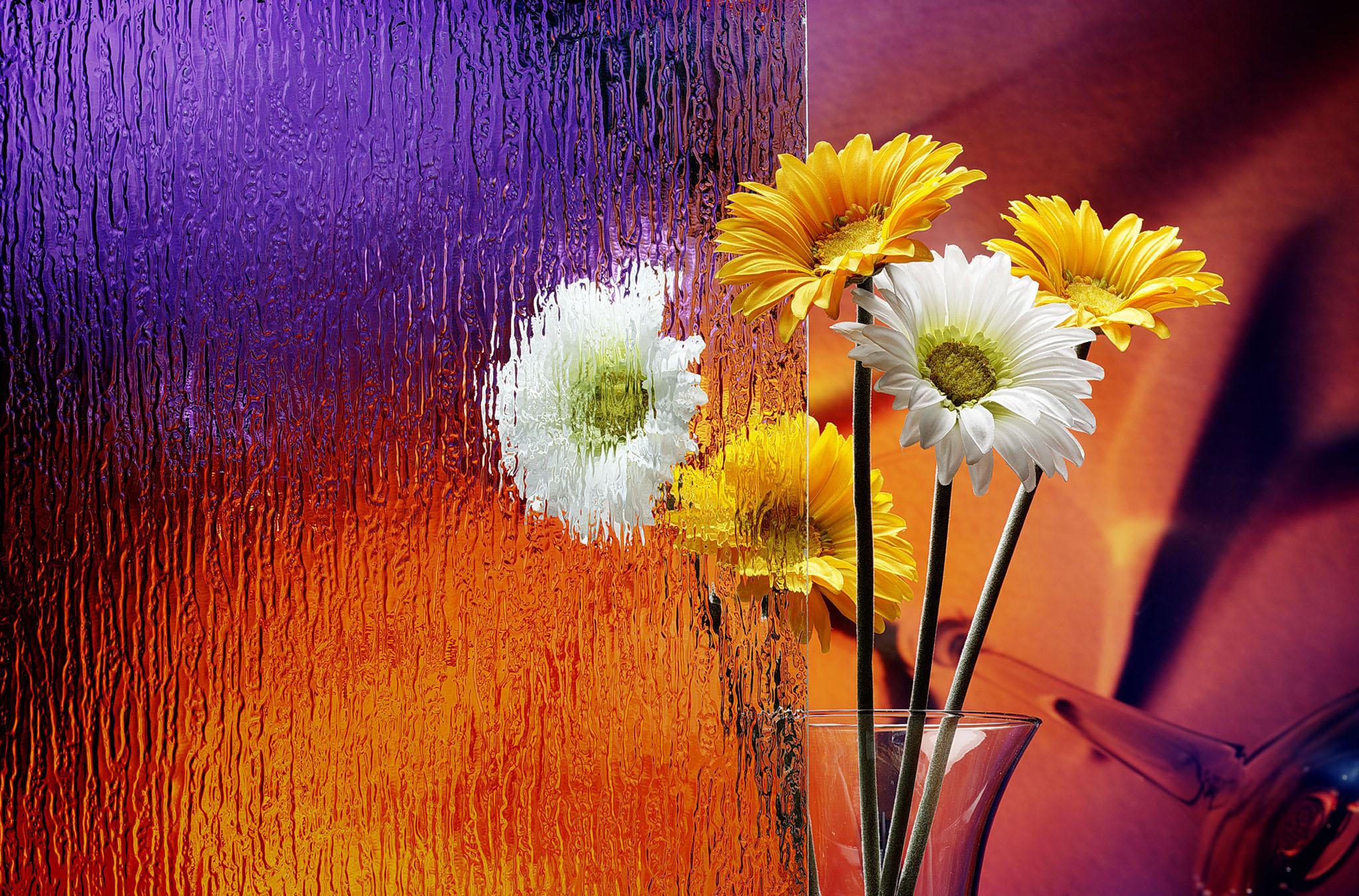 beautiful flower pics -