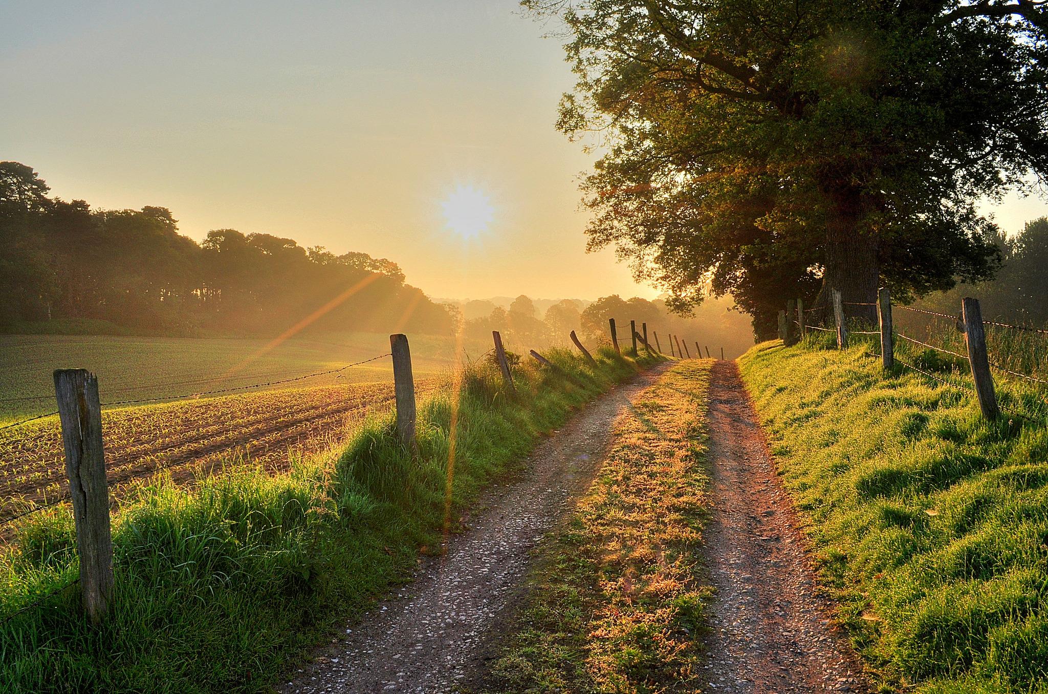 дорога, солнце, трава, деревья  № 3117725 без смс