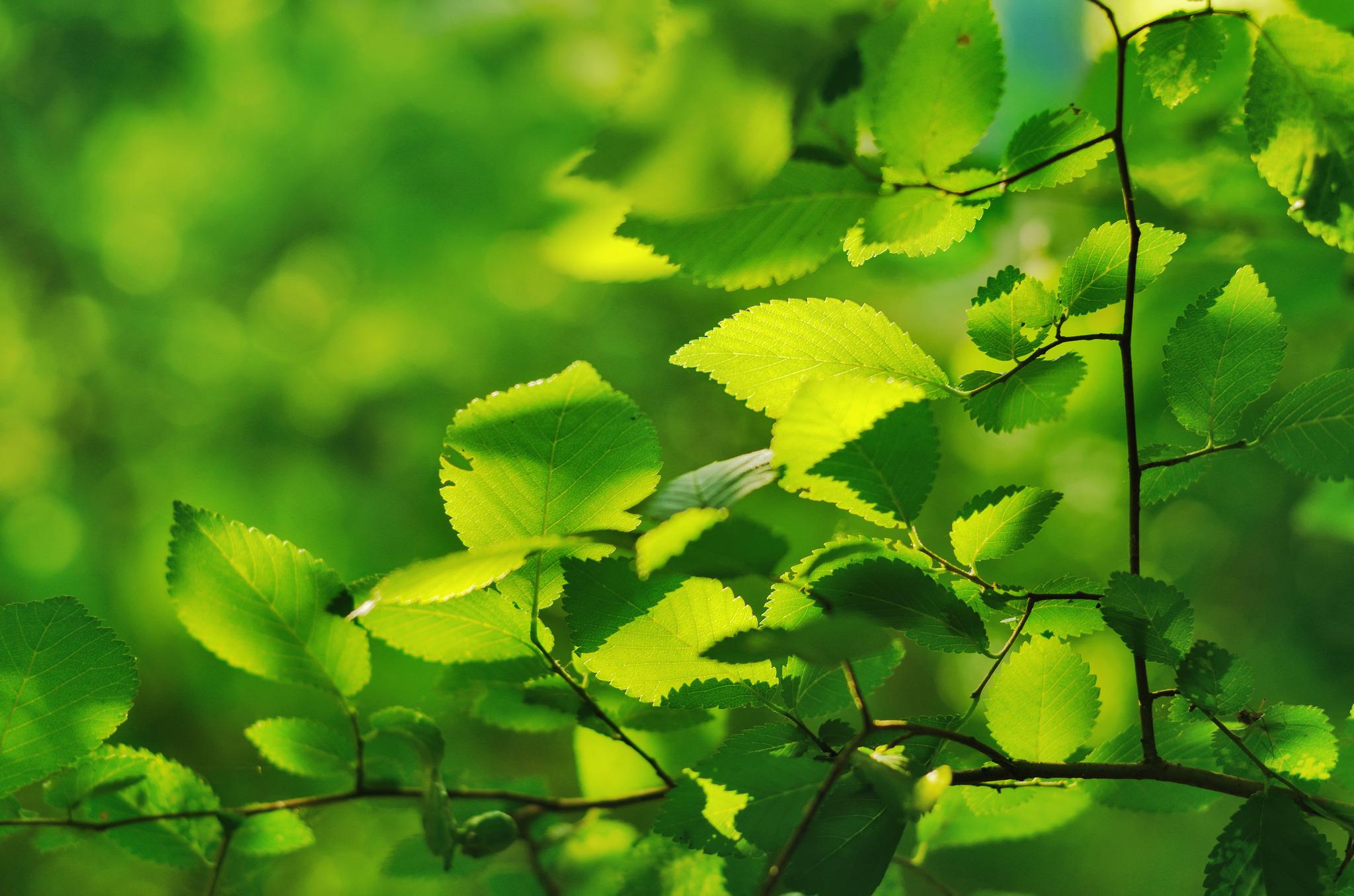 картинки природа листочки способом
