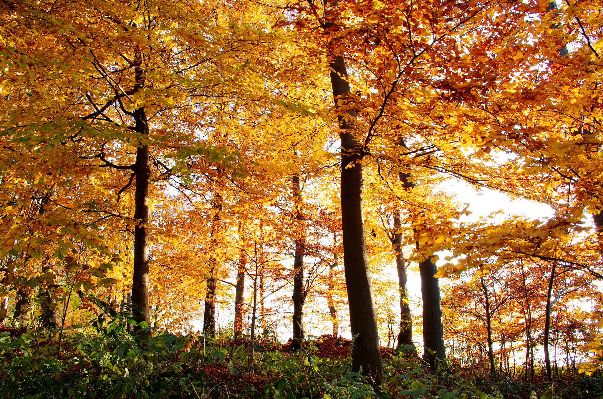 Осень листва лес  № 3162808 бесплатно