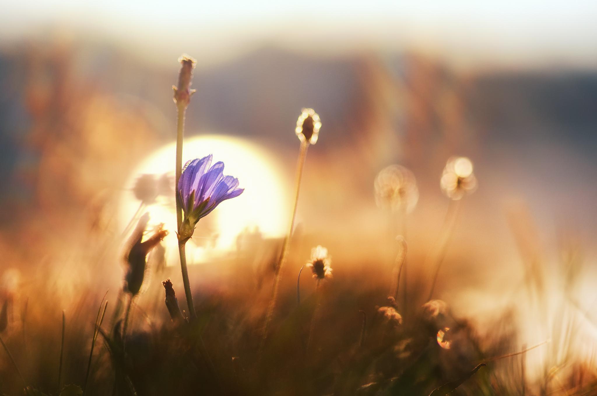 Доброе утро картинки рассветы летом с надписями