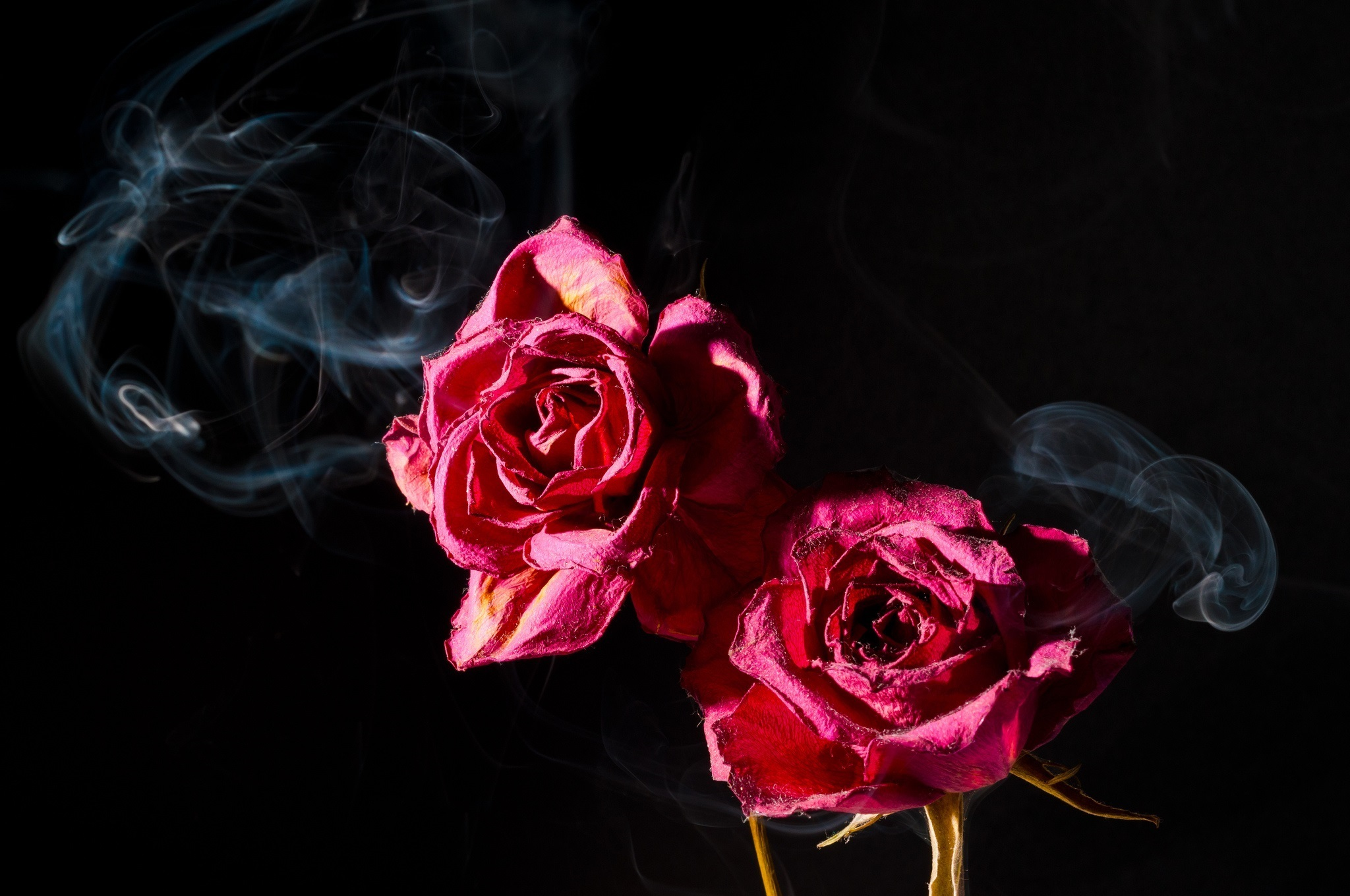 Легкого пластилина, открытка темные розы