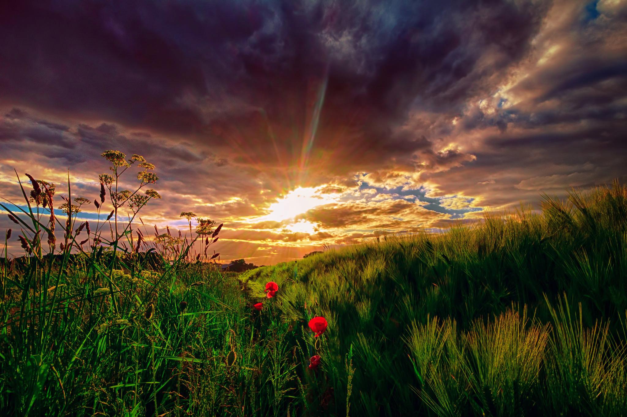 природа цветы трава мельниц восход солнце  № 2556679 загрузить