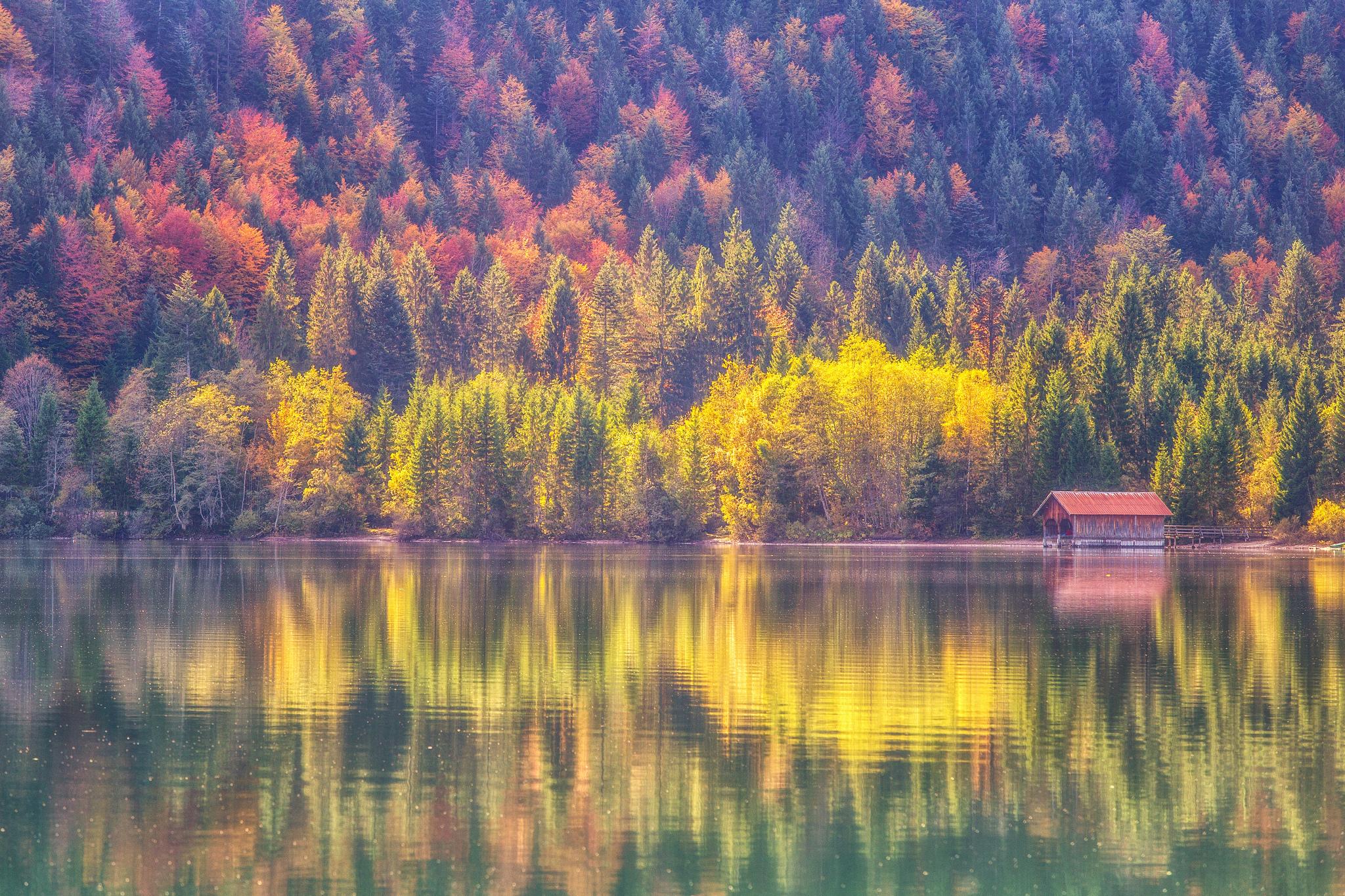 осенний лес у озера  № 254821 без смс