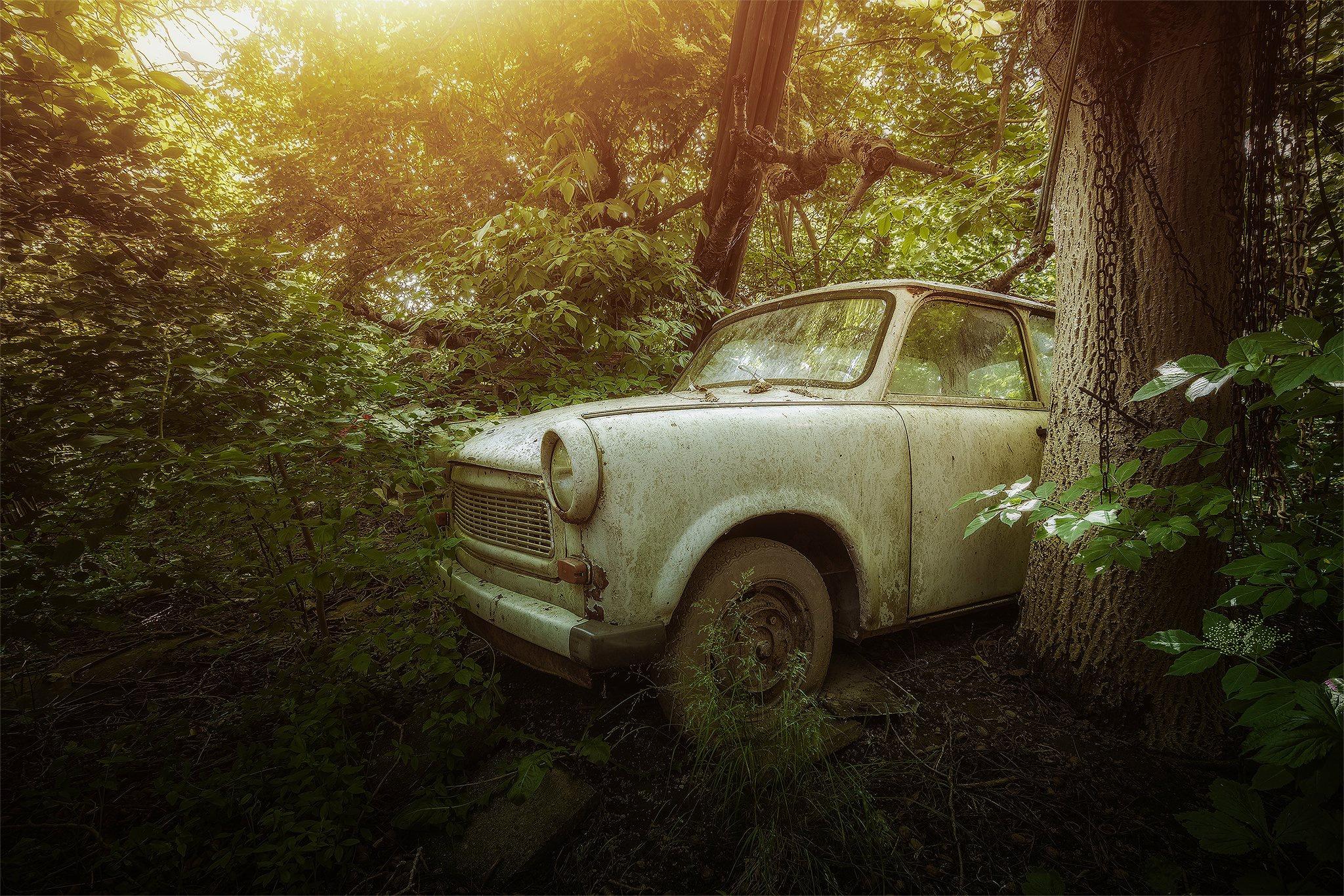 этом машина в лесу картинка для несколько старых мешков