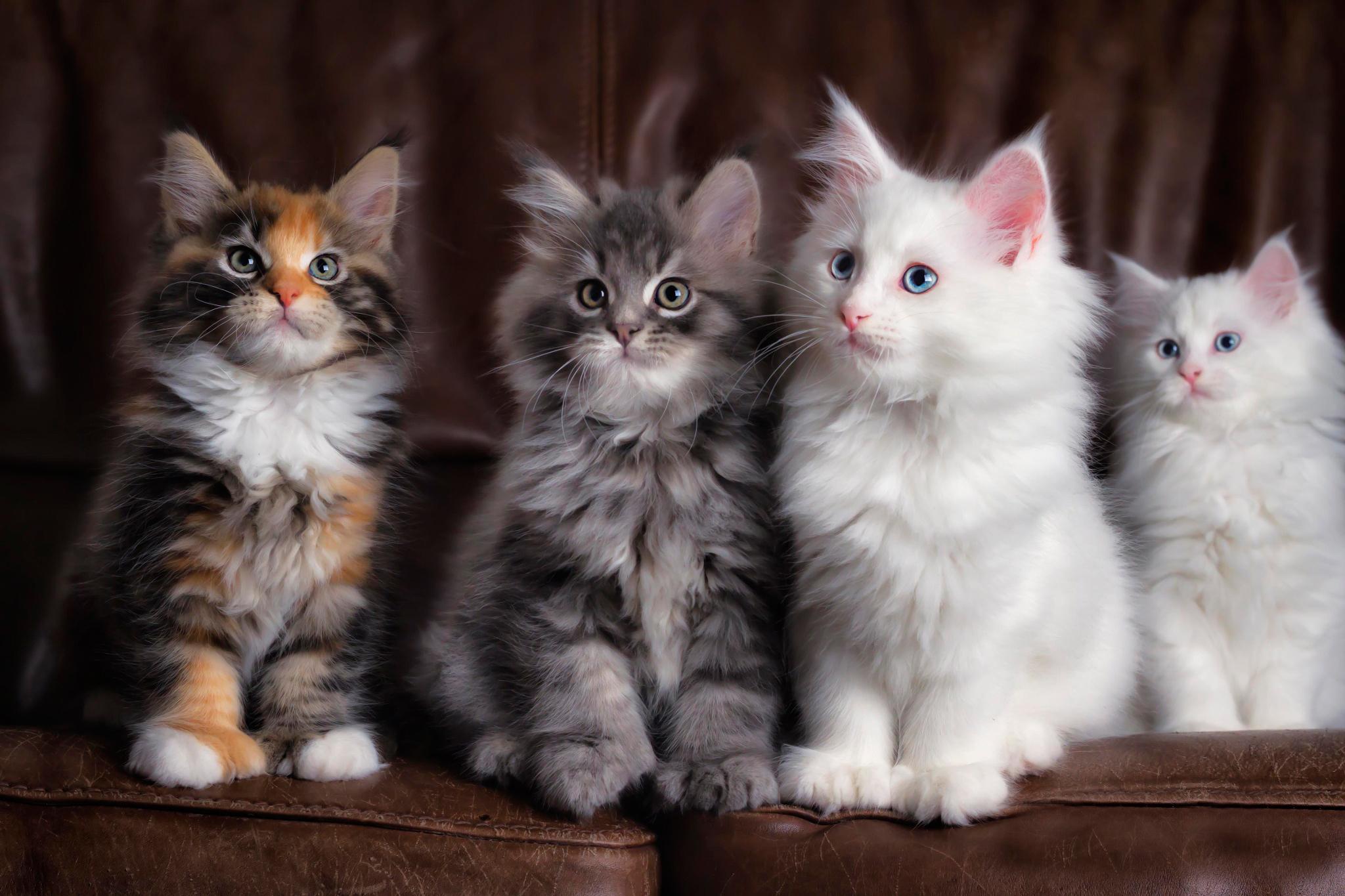 Красивые картинки с котятками