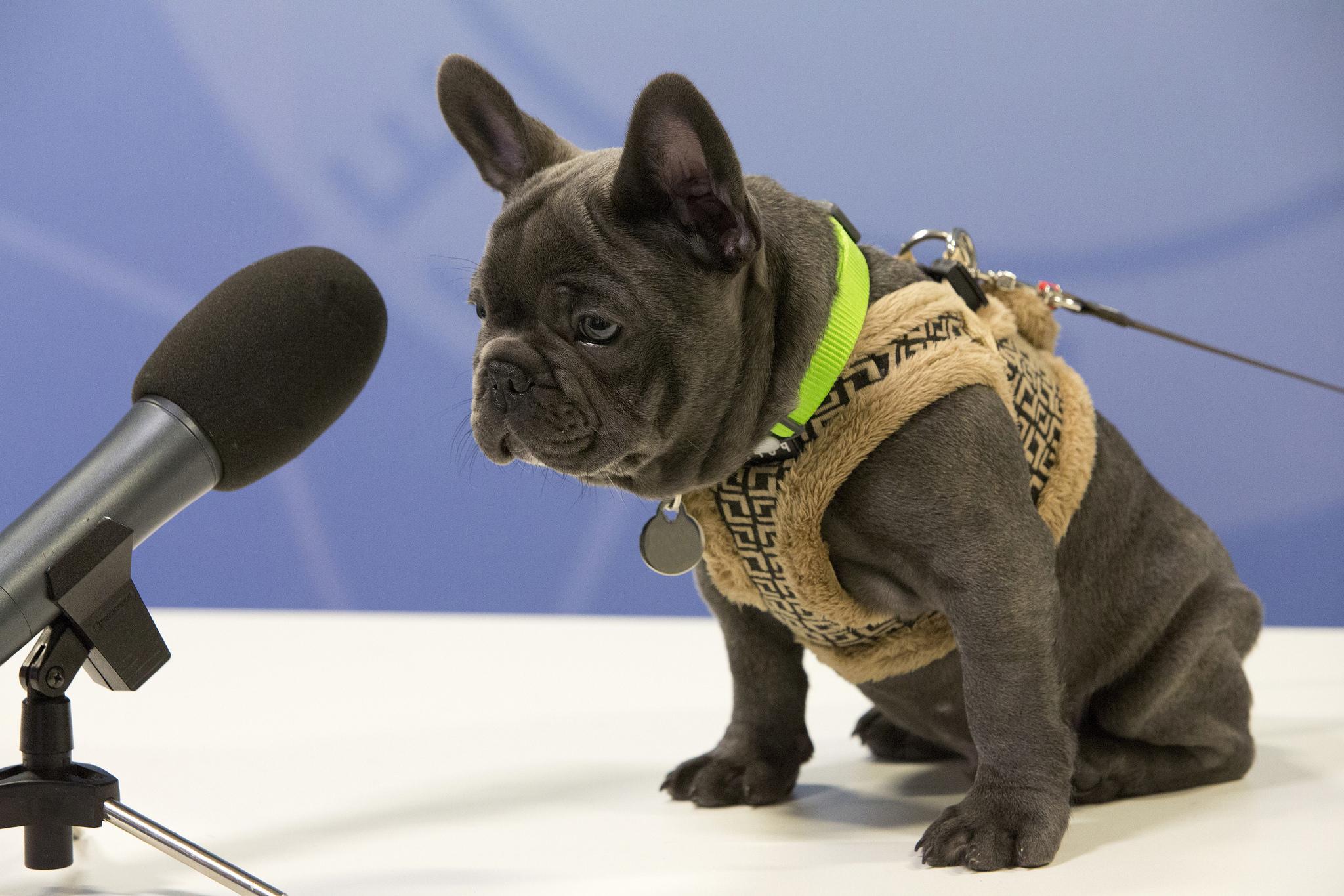 получила картинка собака с микрофоном коктейль