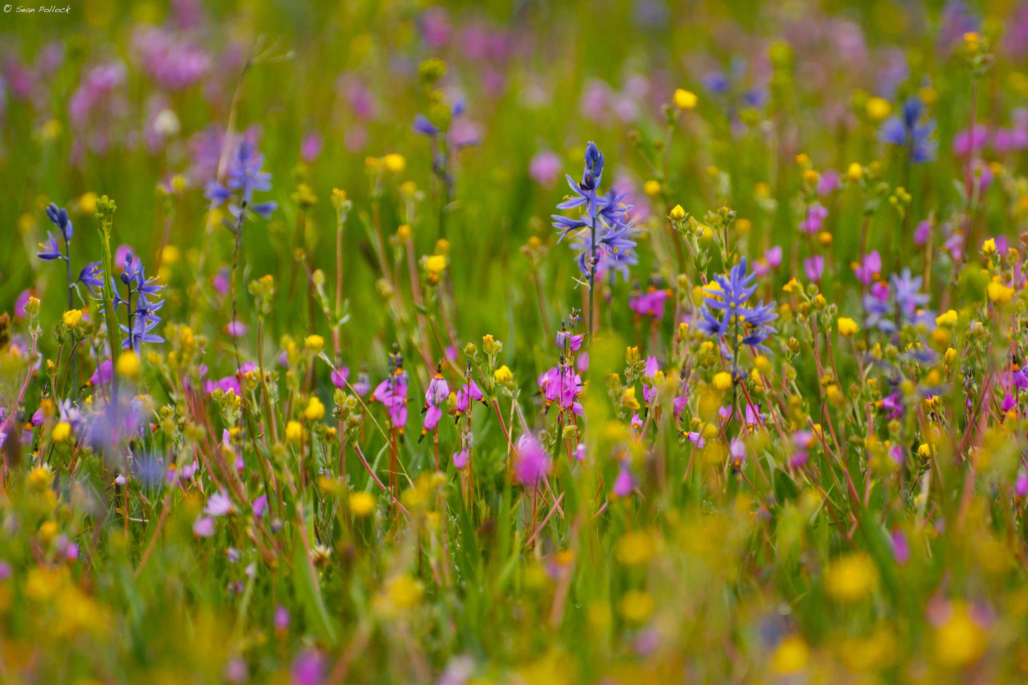 Полевые цветы травы купить минск