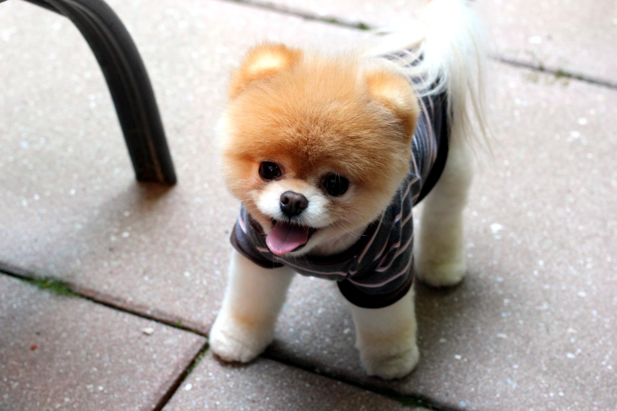 фото собак маленьких пород тогда