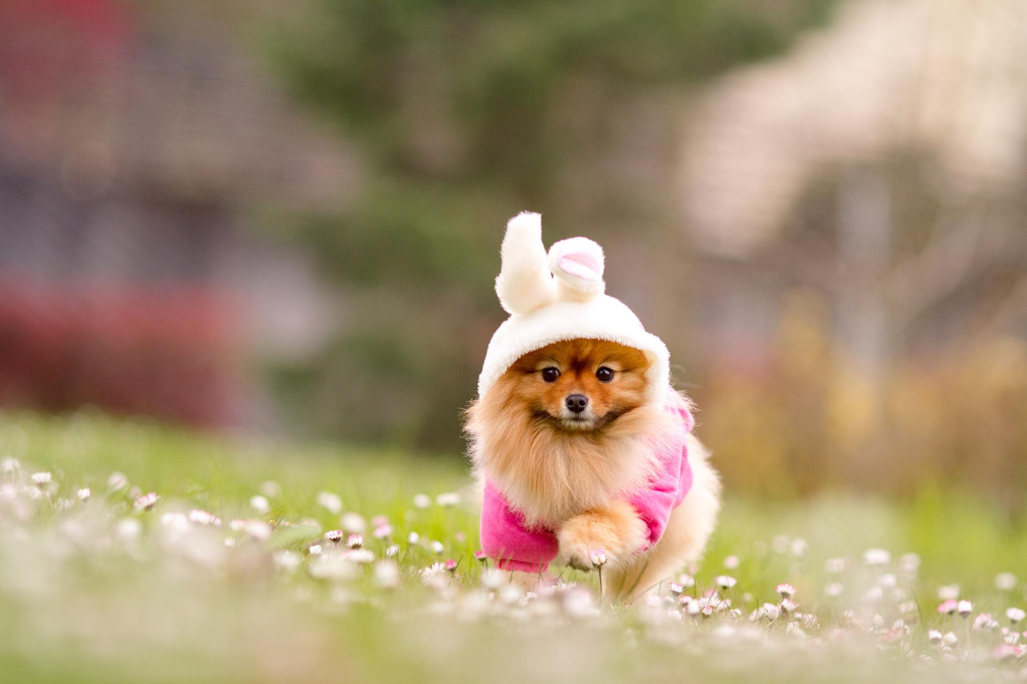 картинка собачка в одежде