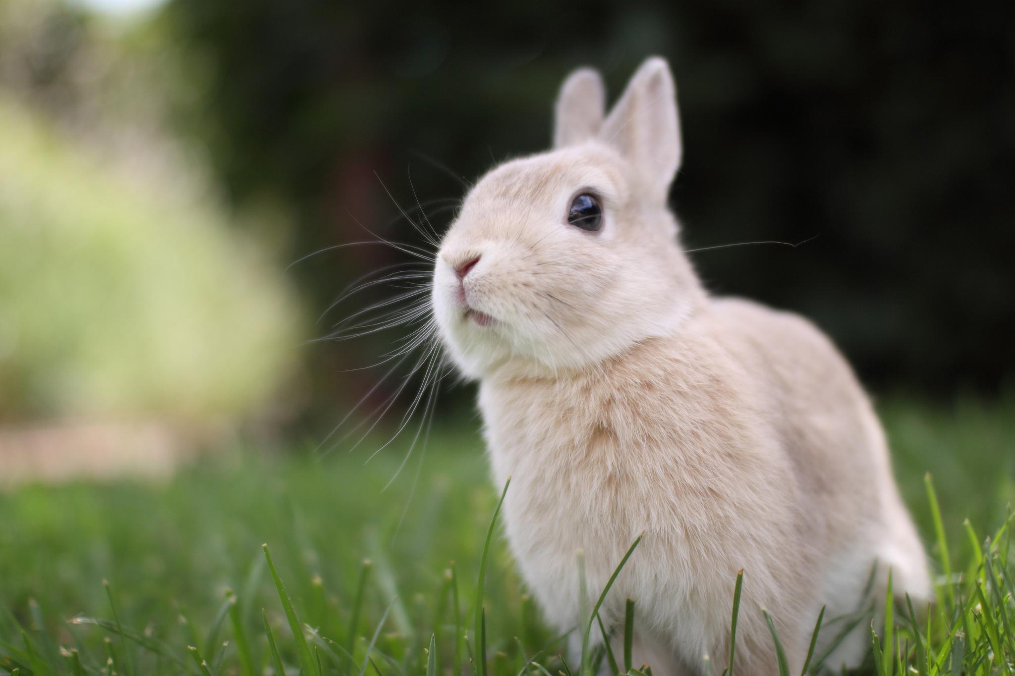 Кролик макро  № 3207737 загрузить