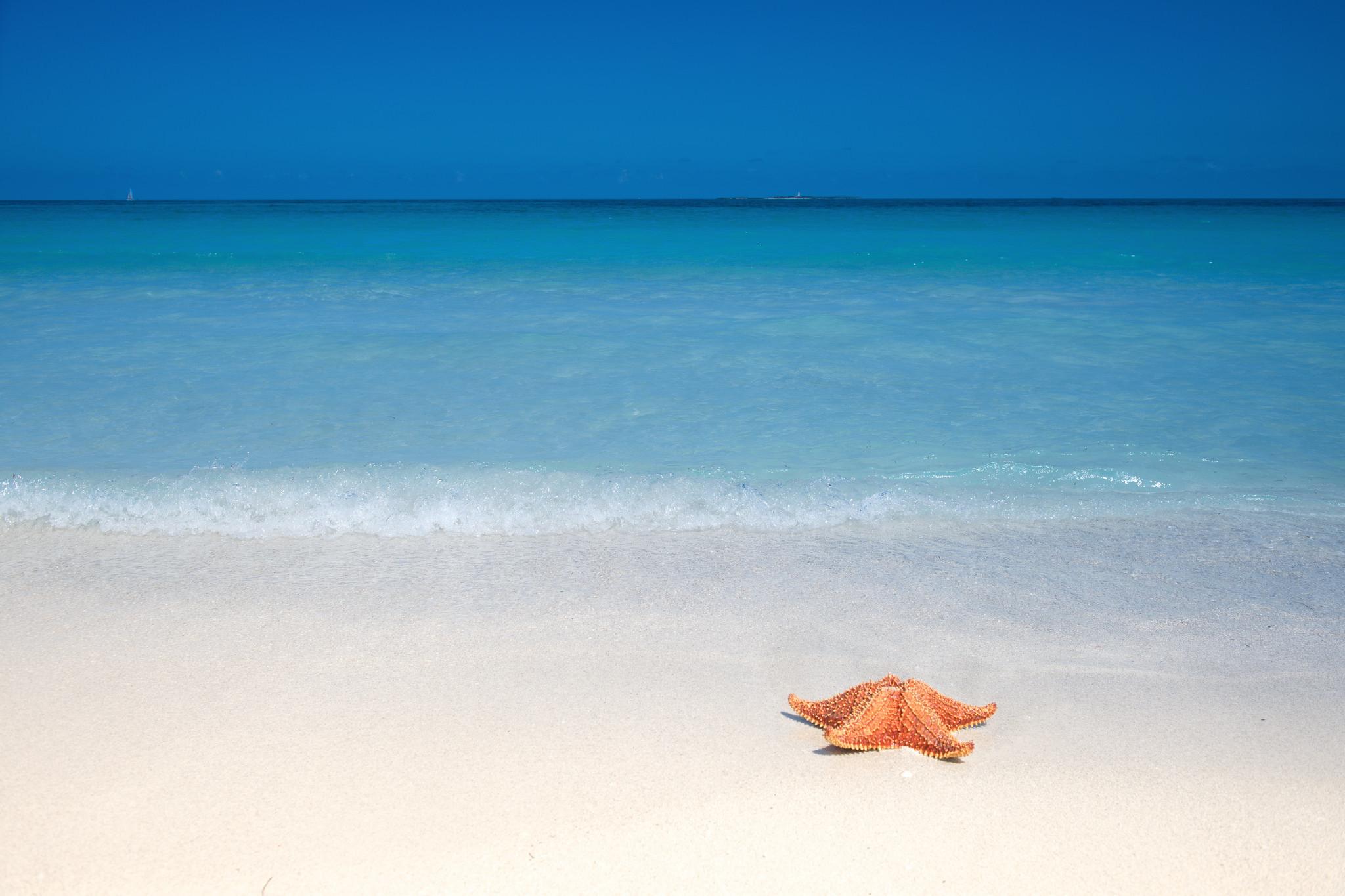 фото фотообои море пляж морская звезда наличии