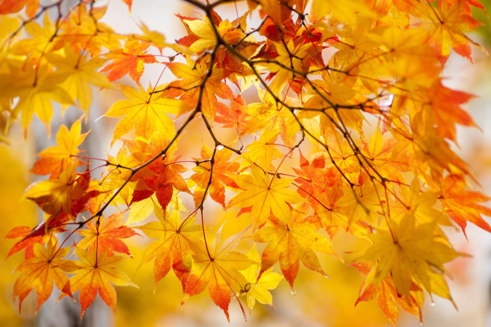 Картинка яблоком, осенние картинки октябрьские