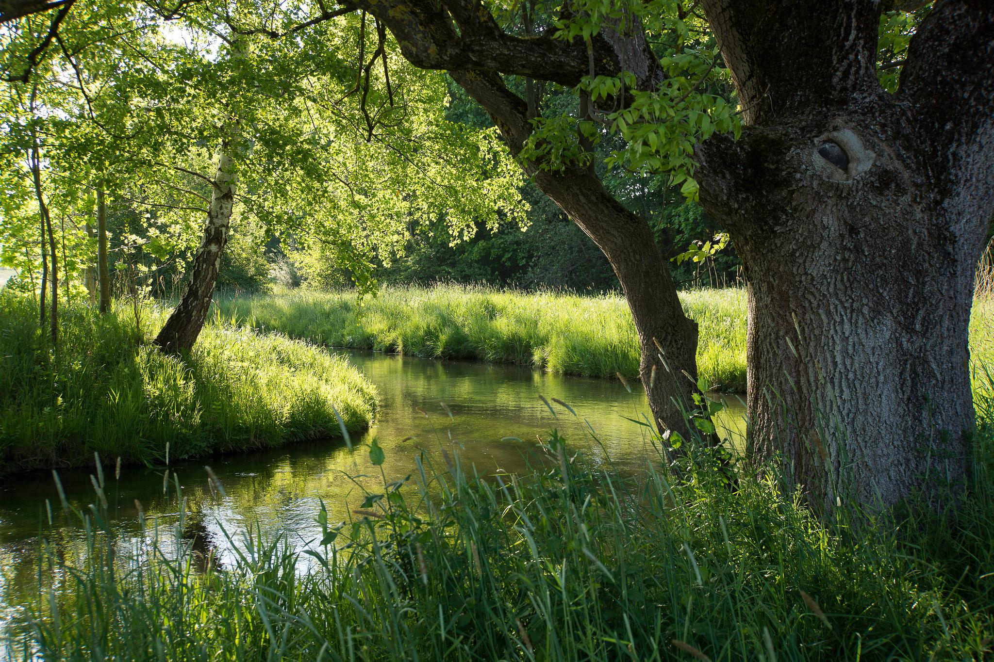 река лес  № 2789148 загрузить