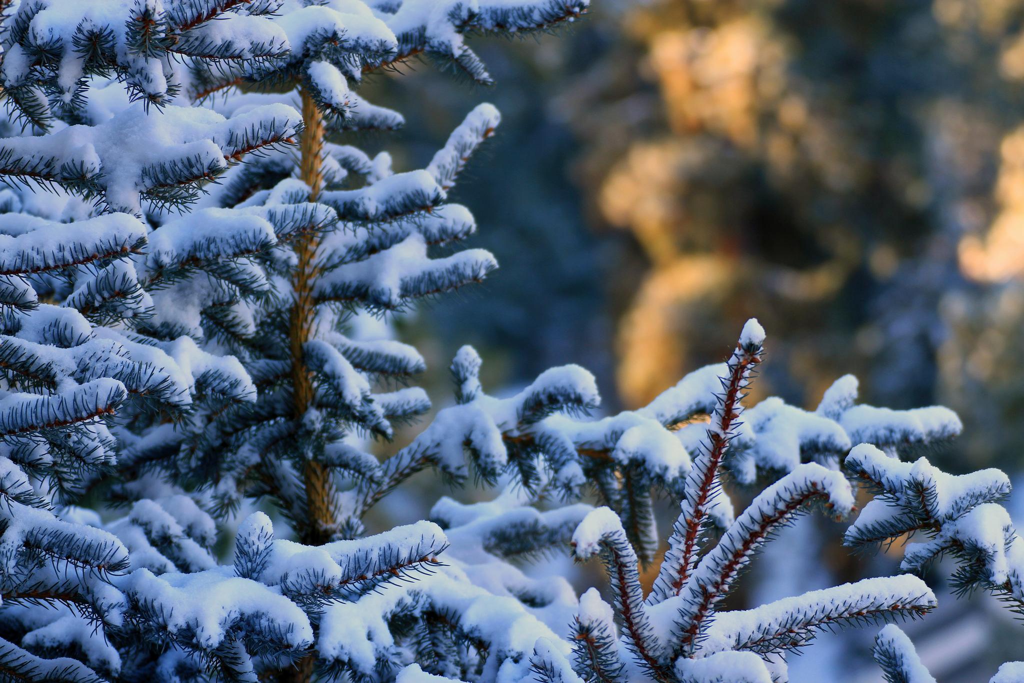 снег ветви лес snow branches forest  № 442849 бесплатно