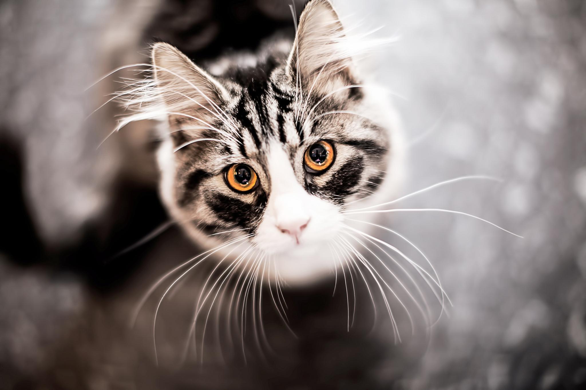 кошка язык глаза сердечки  № 2824888  скачать