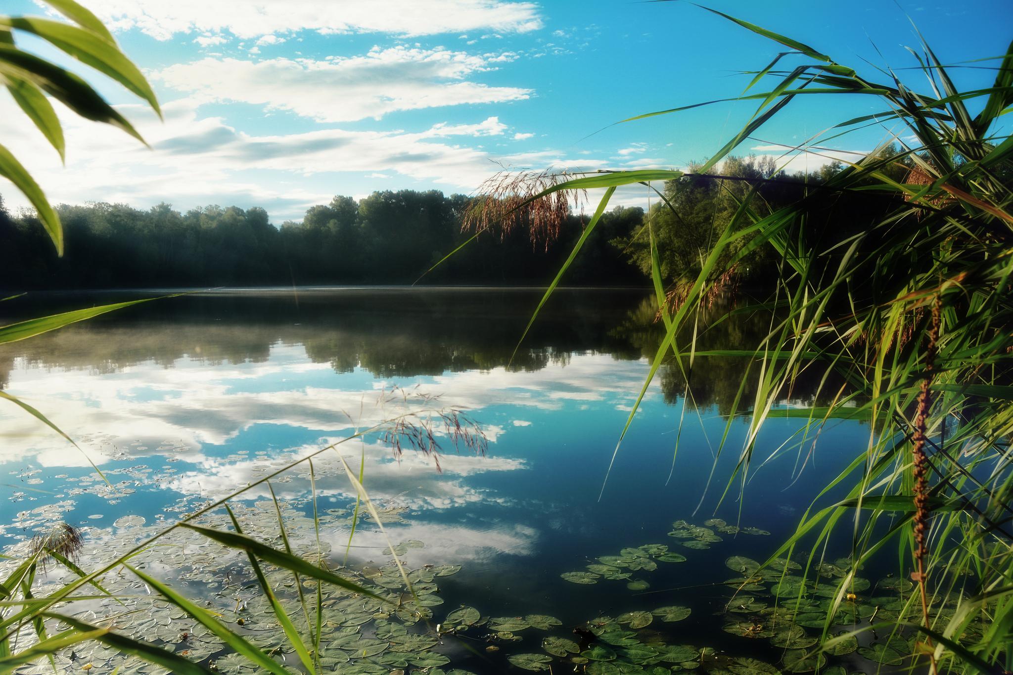 лето речка камыш  № 368845  скачать