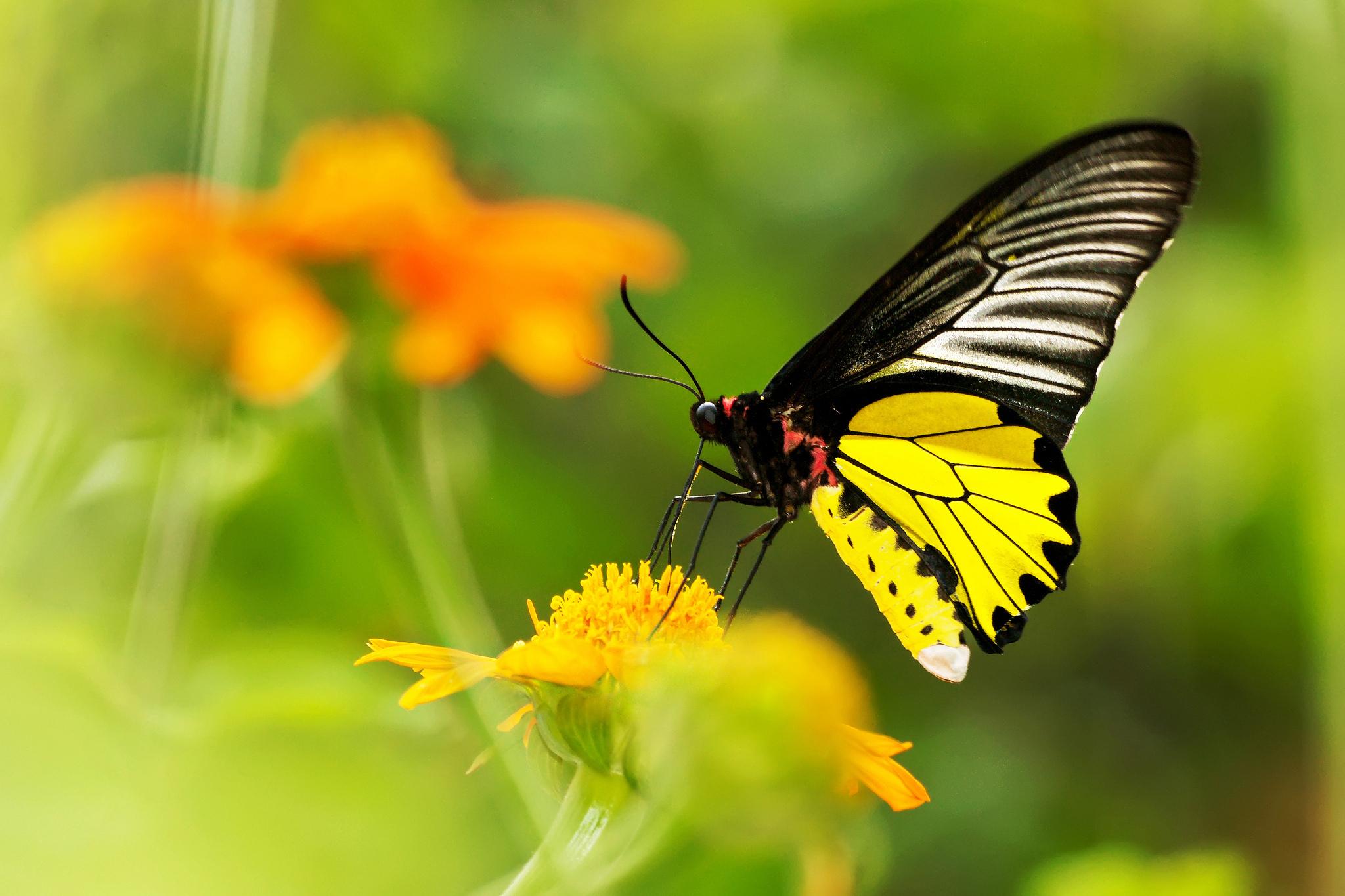природа макро бабочка цветы желтые  № 1238580 загрузить