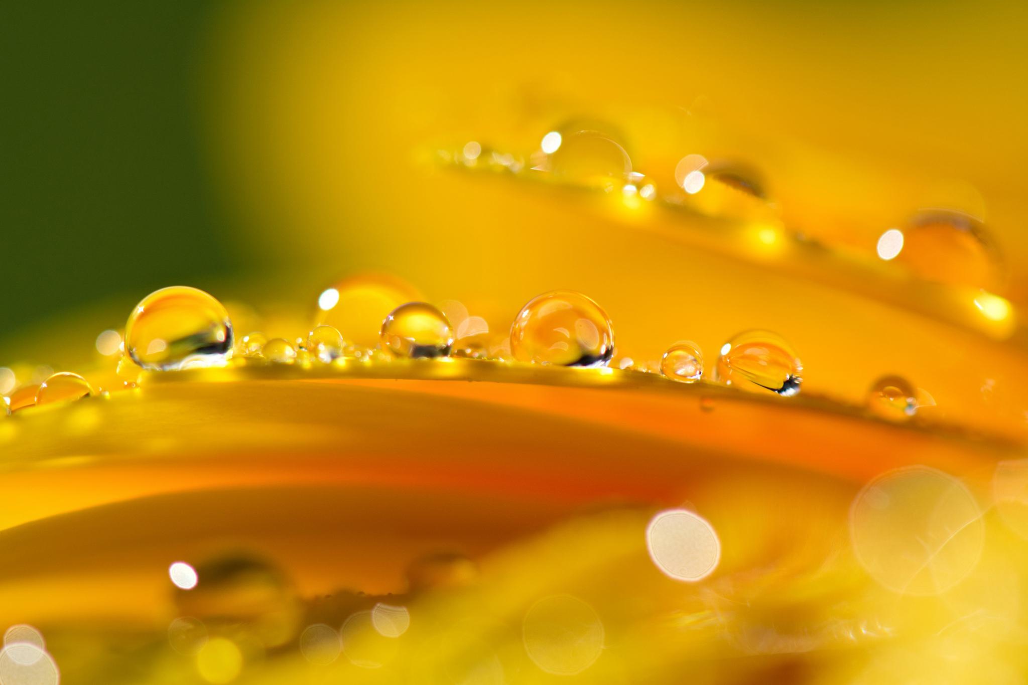 листок капля желтый на воде  № 2777398 бесплатно