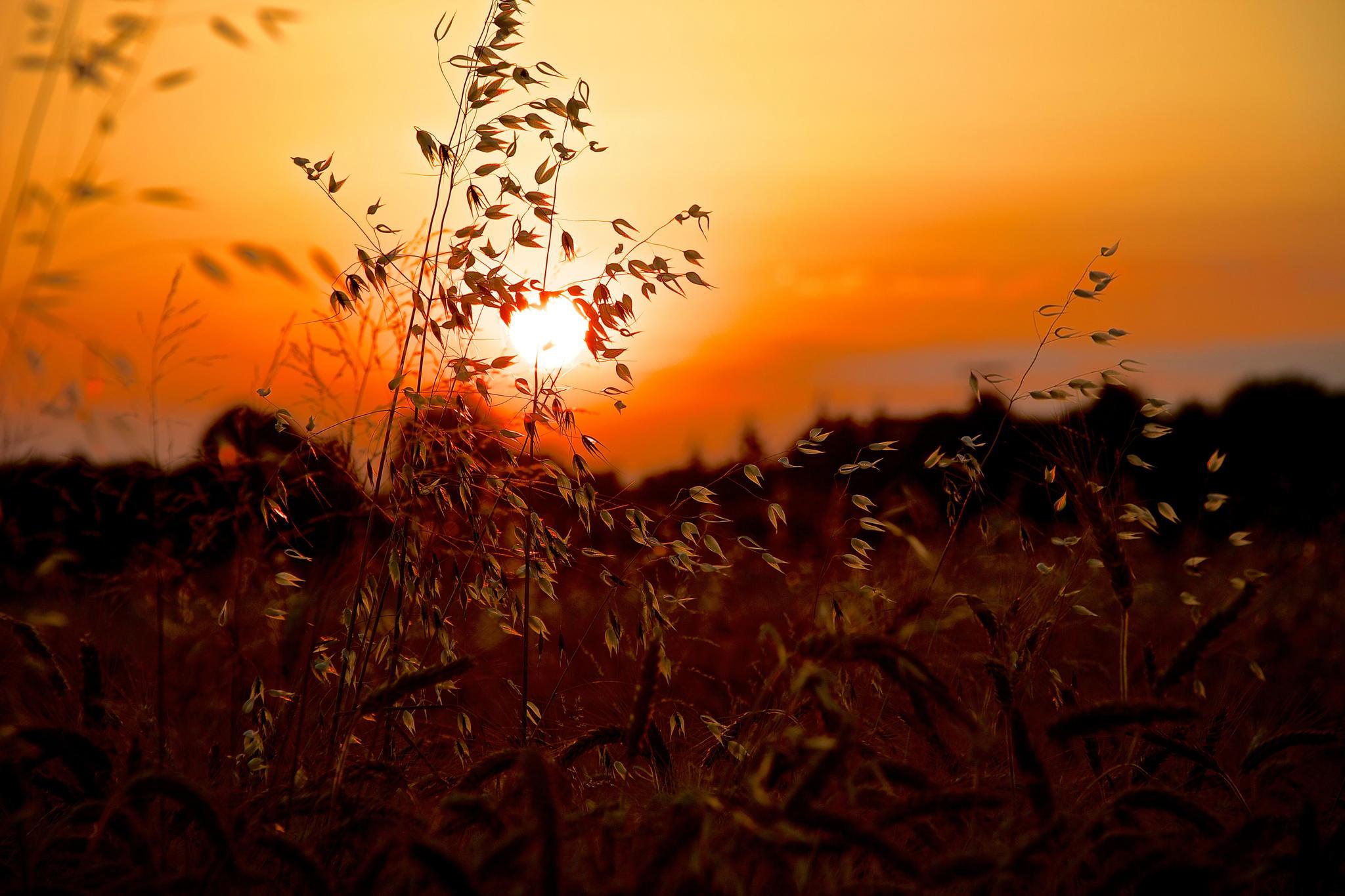 картинки закат и трава