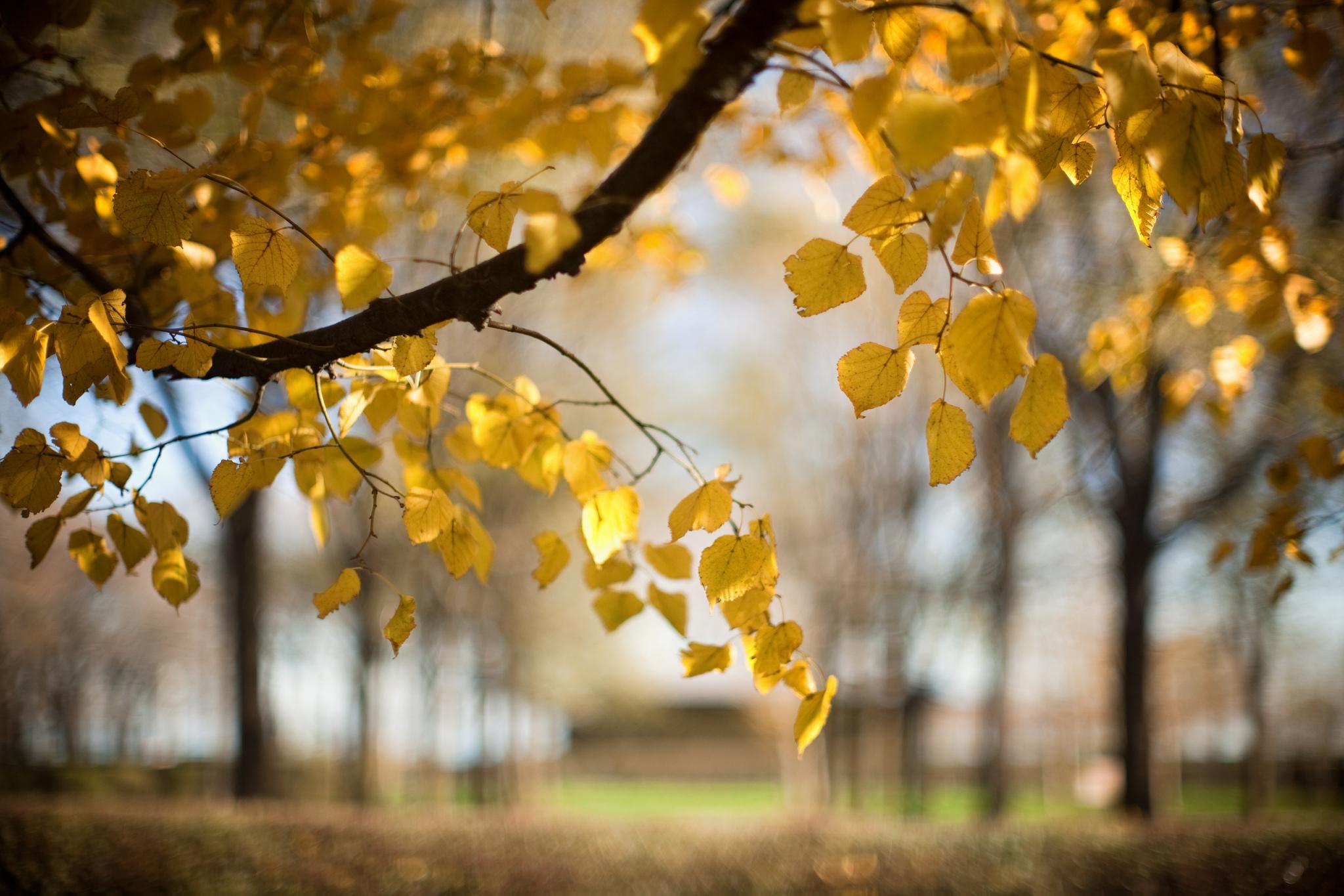 деревья листва осень солнце  № 3191799  скачать