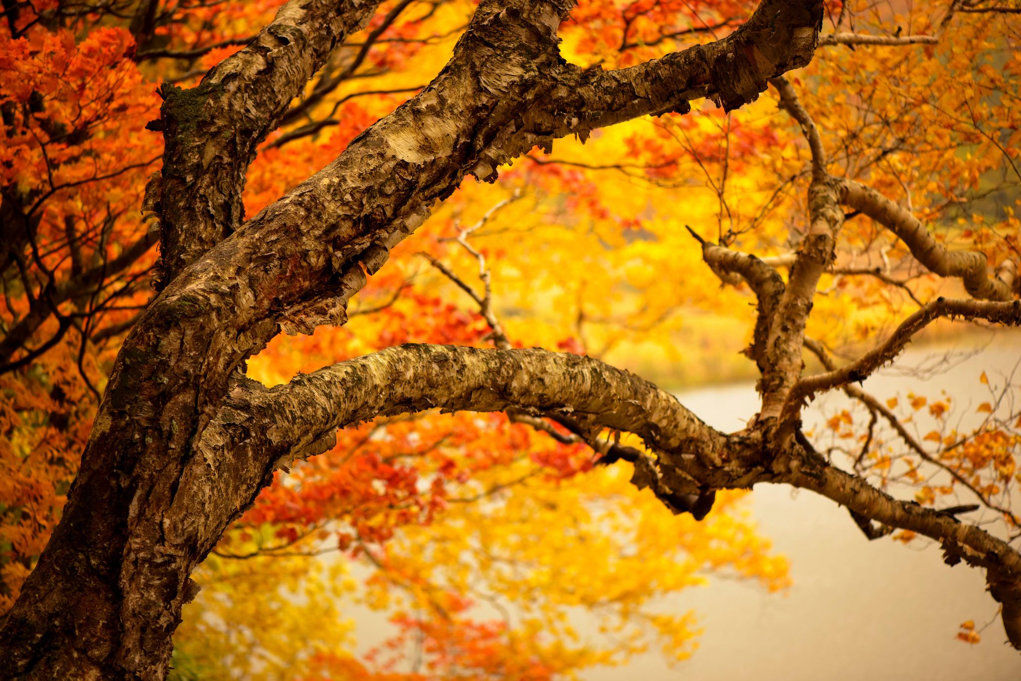 природа деревья листья осень nature trees leaves autumn  № 1036912 загрузить