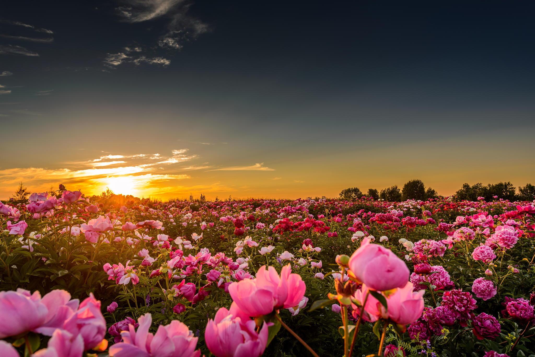 растение картинки на телефон красивые цветы и природа вертолетчики натуре романтики