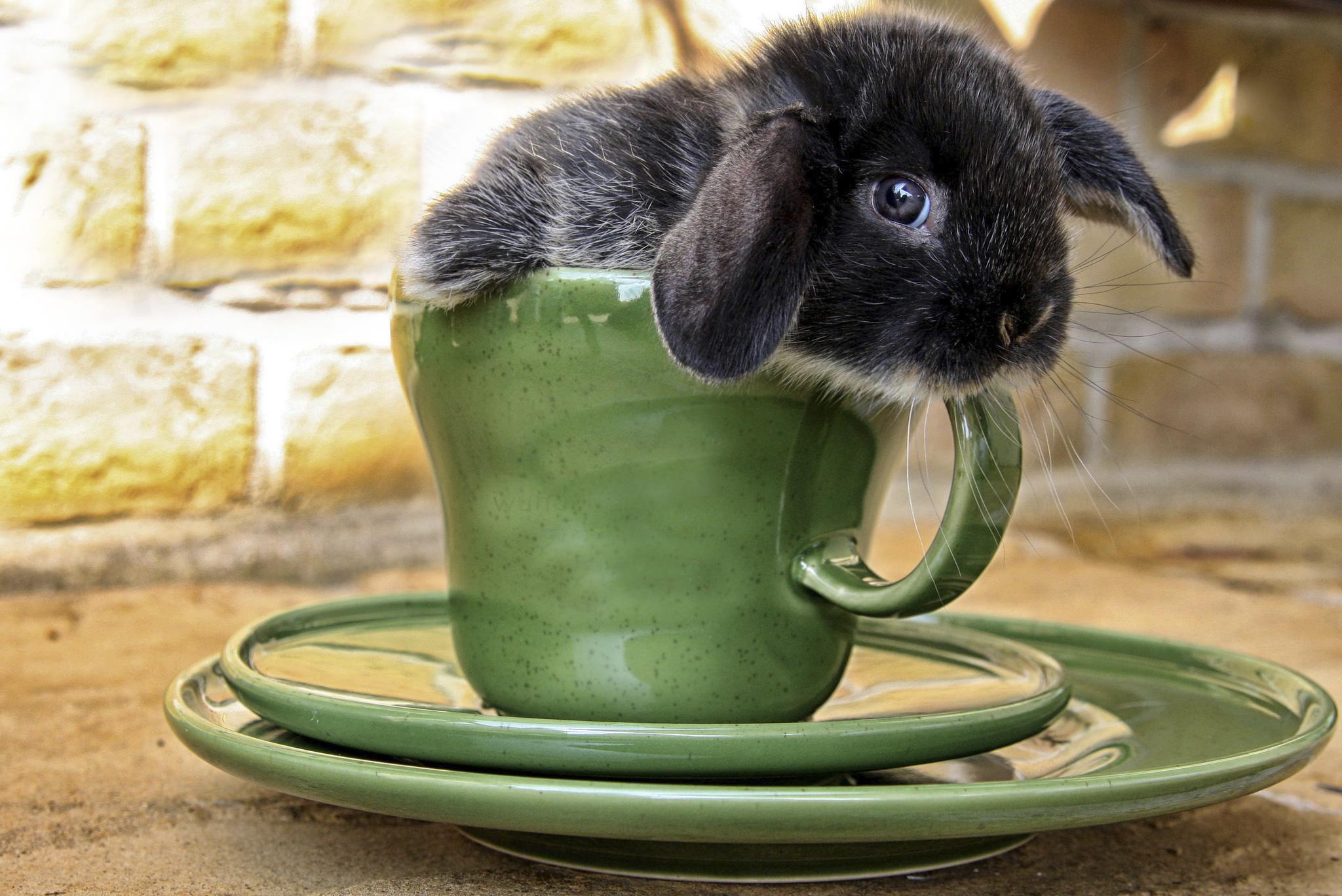 Кролик макро  № 3207791 бесплатно