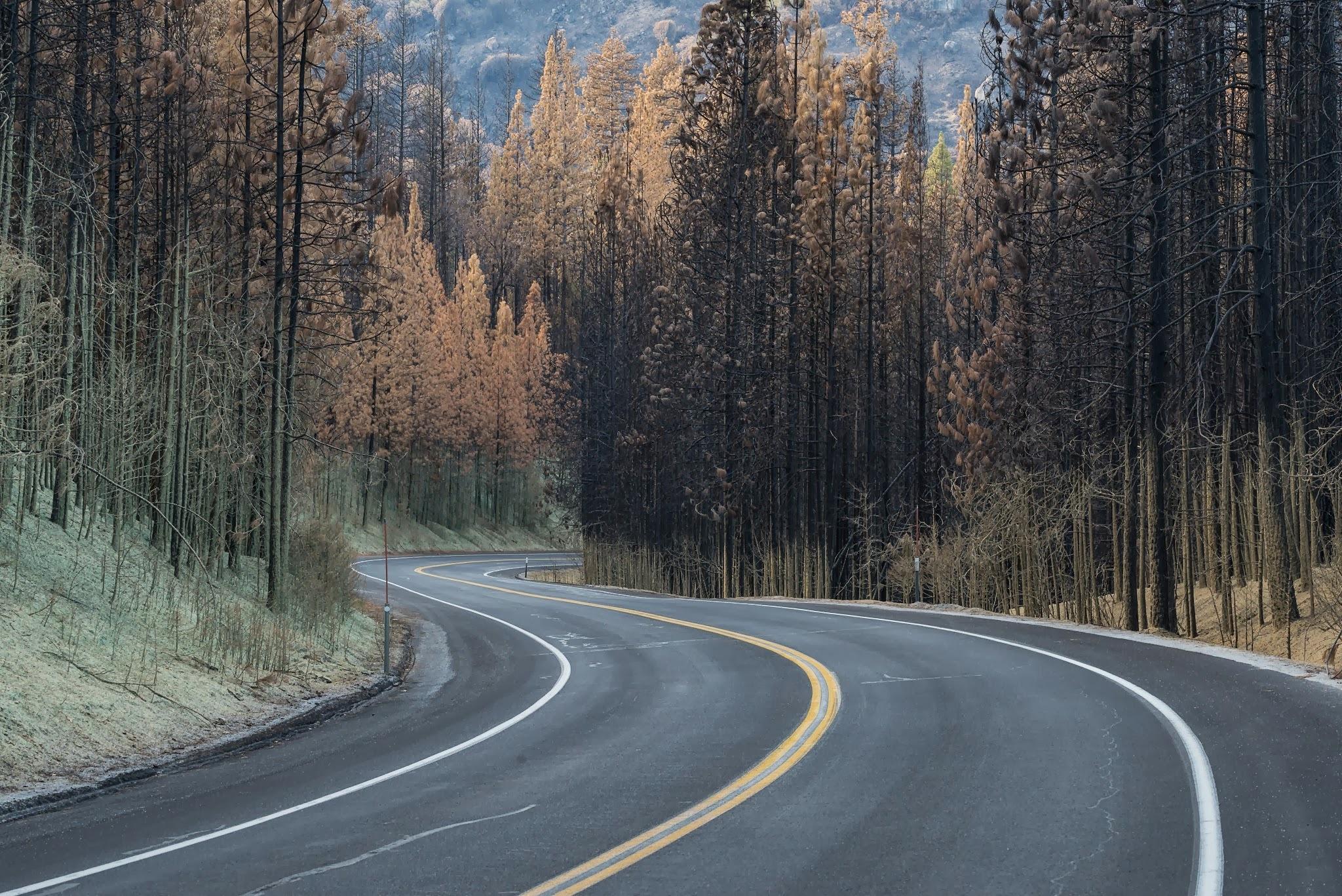 Картинки повороты лесных дорог