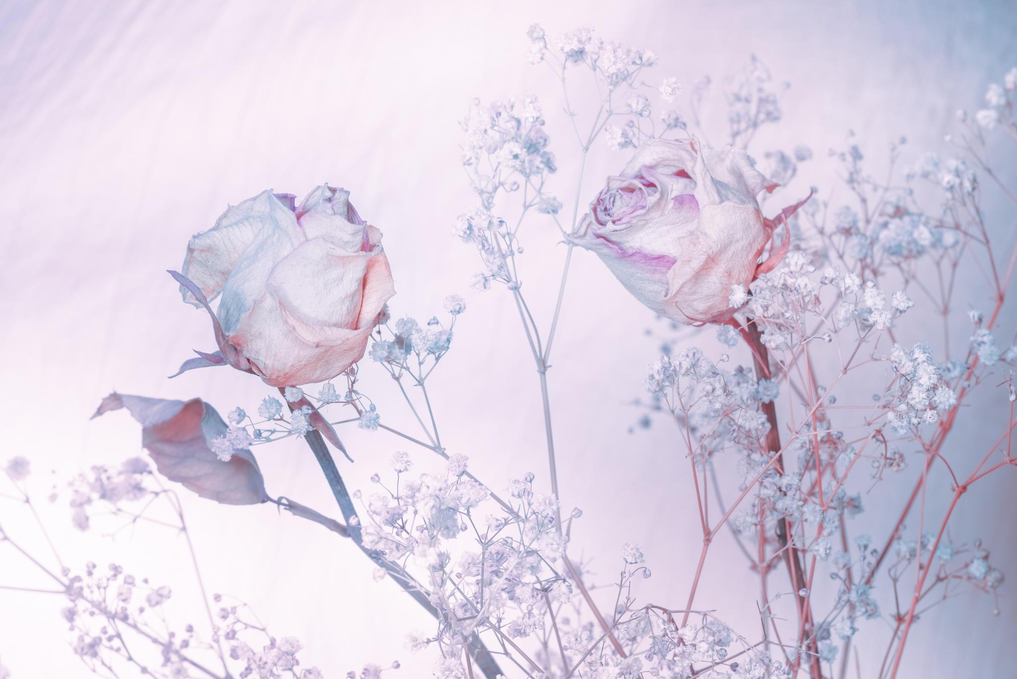 Цветы нежные картинки белый и голубые