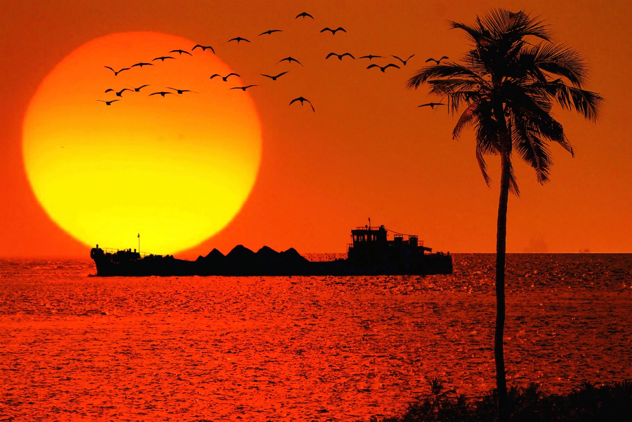 сегодняшний день индийское солнце фотообои ранначан считает