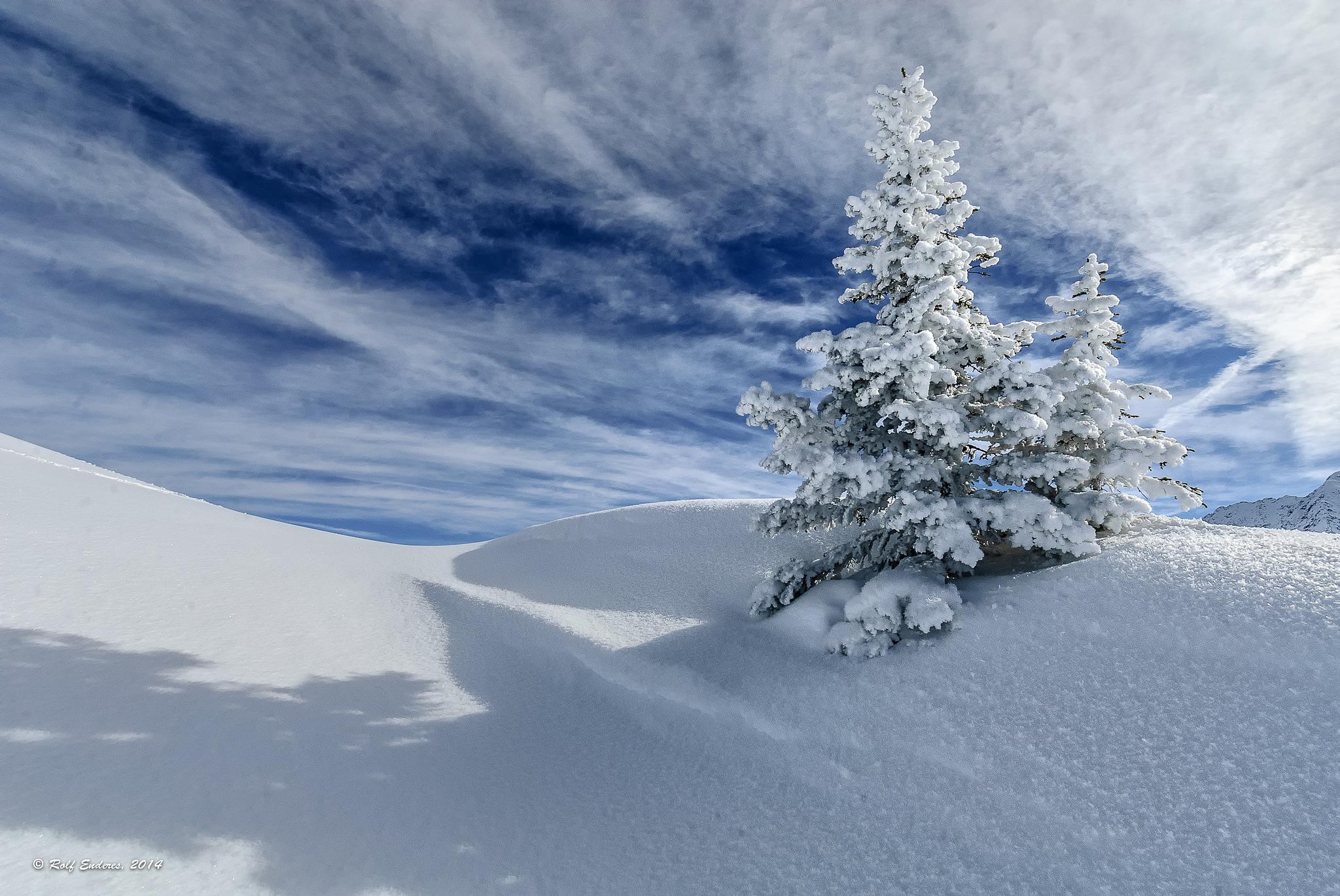 природа деревья ели зима снег небо  № 2803237 бесплатно