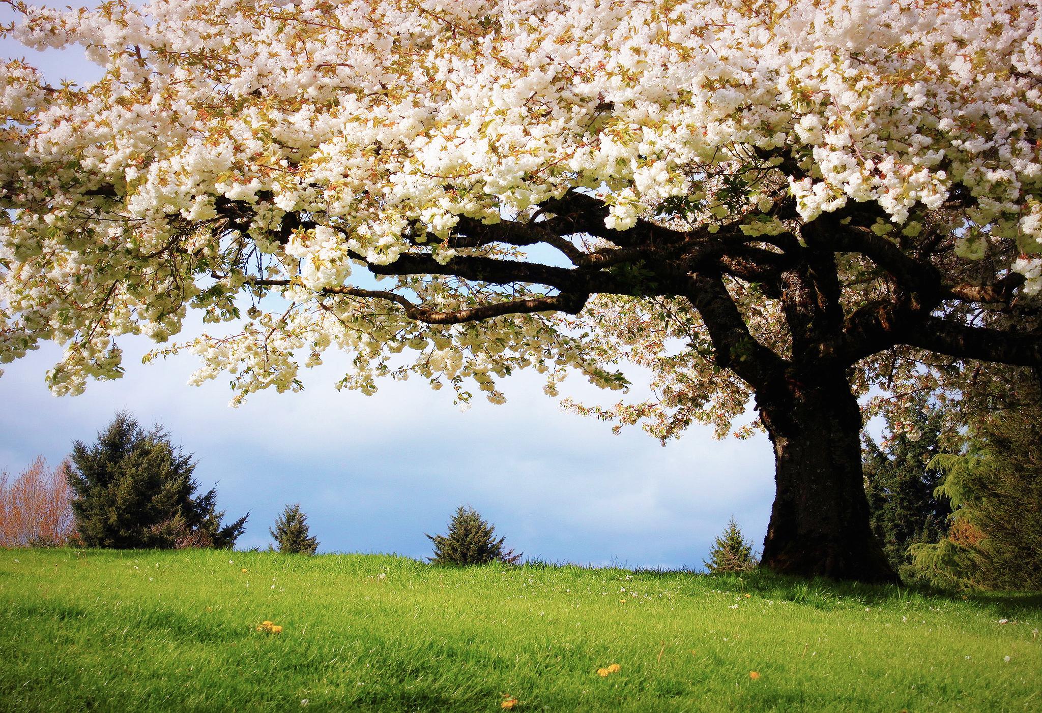 картинки весна для компа пилили деревья городе