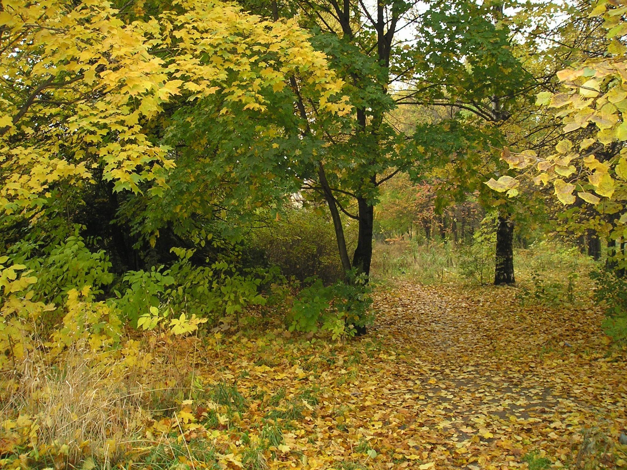 Осенний лиственный лес  № 3193647  скачать