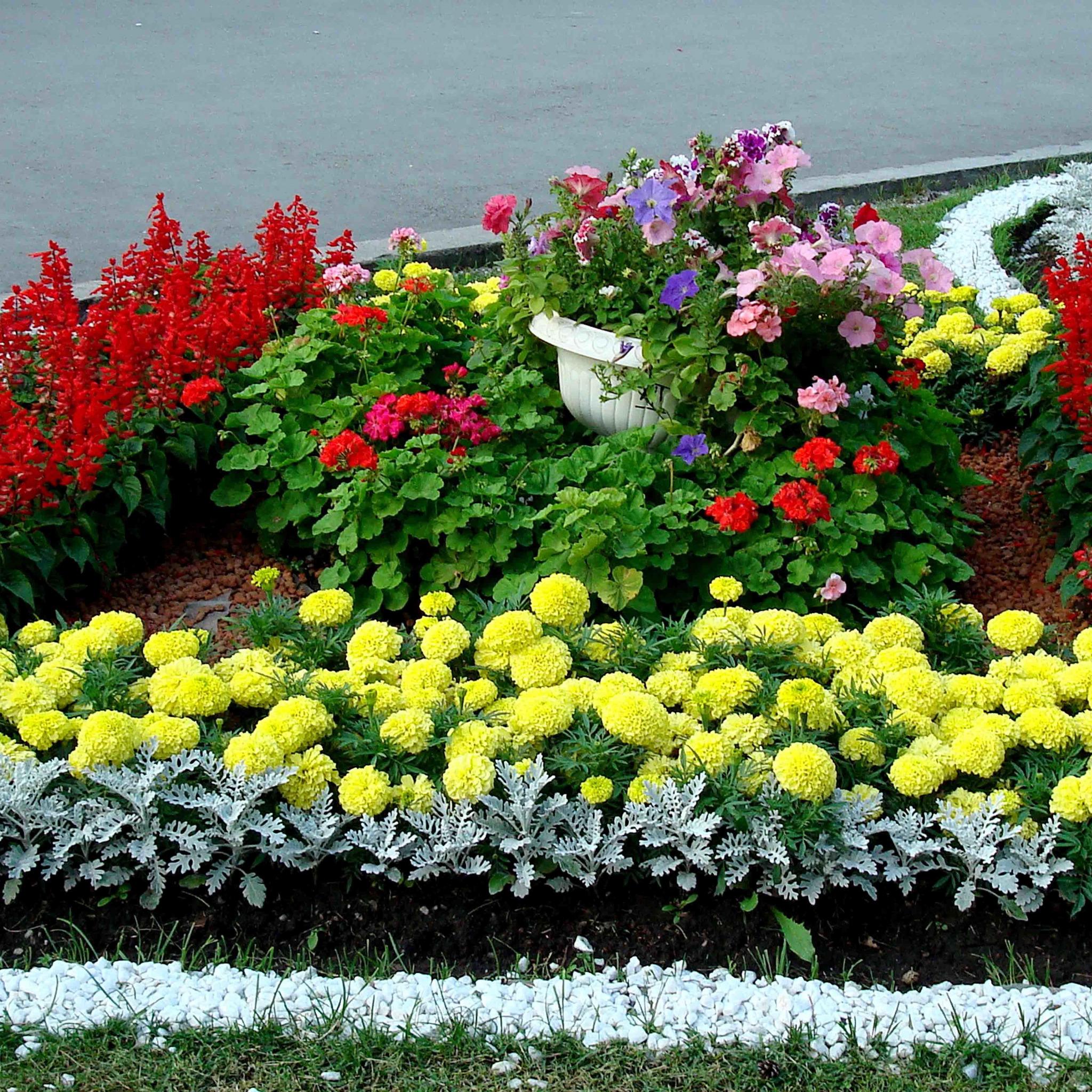 цветы на клумбе цветущие фото современности
