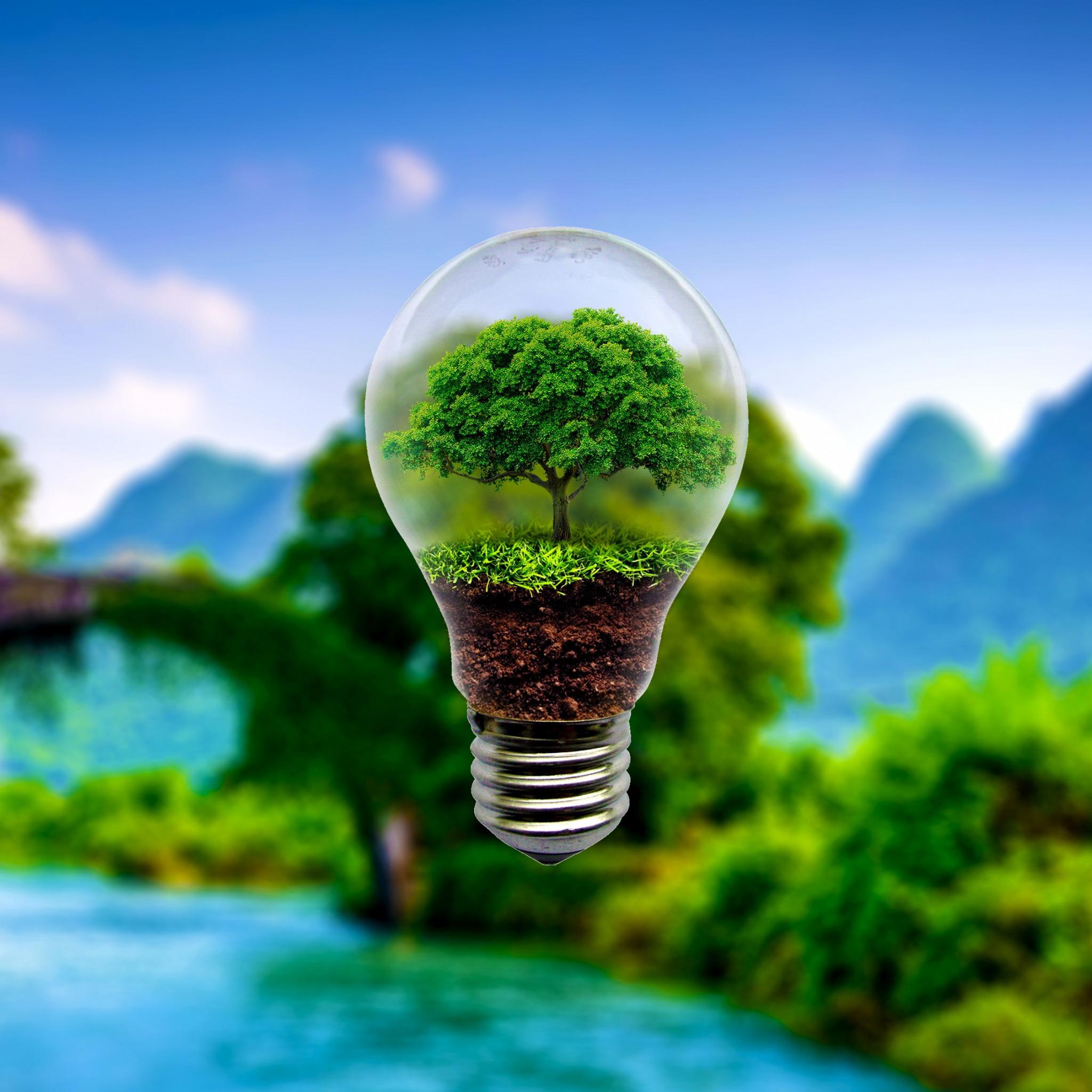 тумбочки картинка лампочка в траве композиция легким