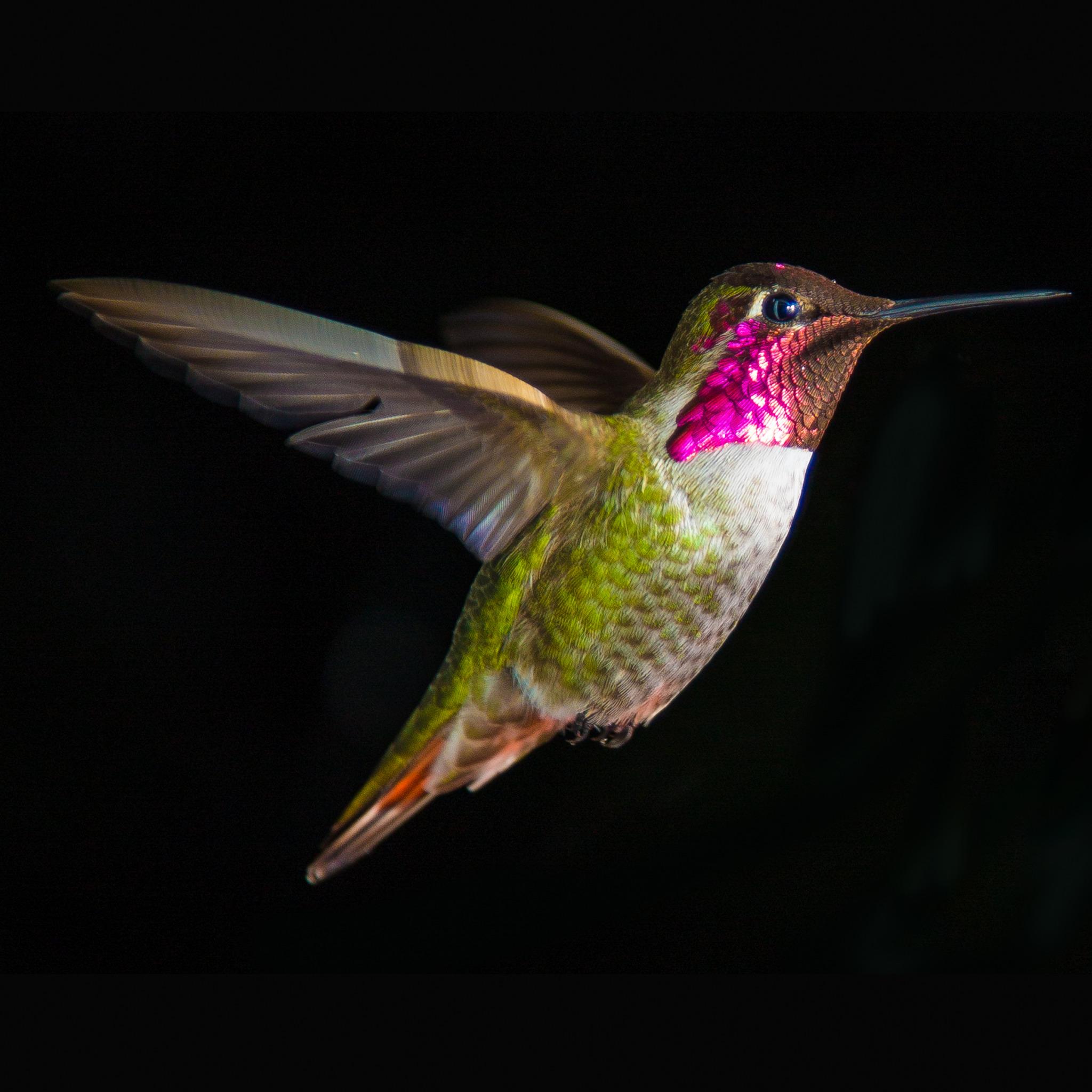 Сообщение о птице колибри фото